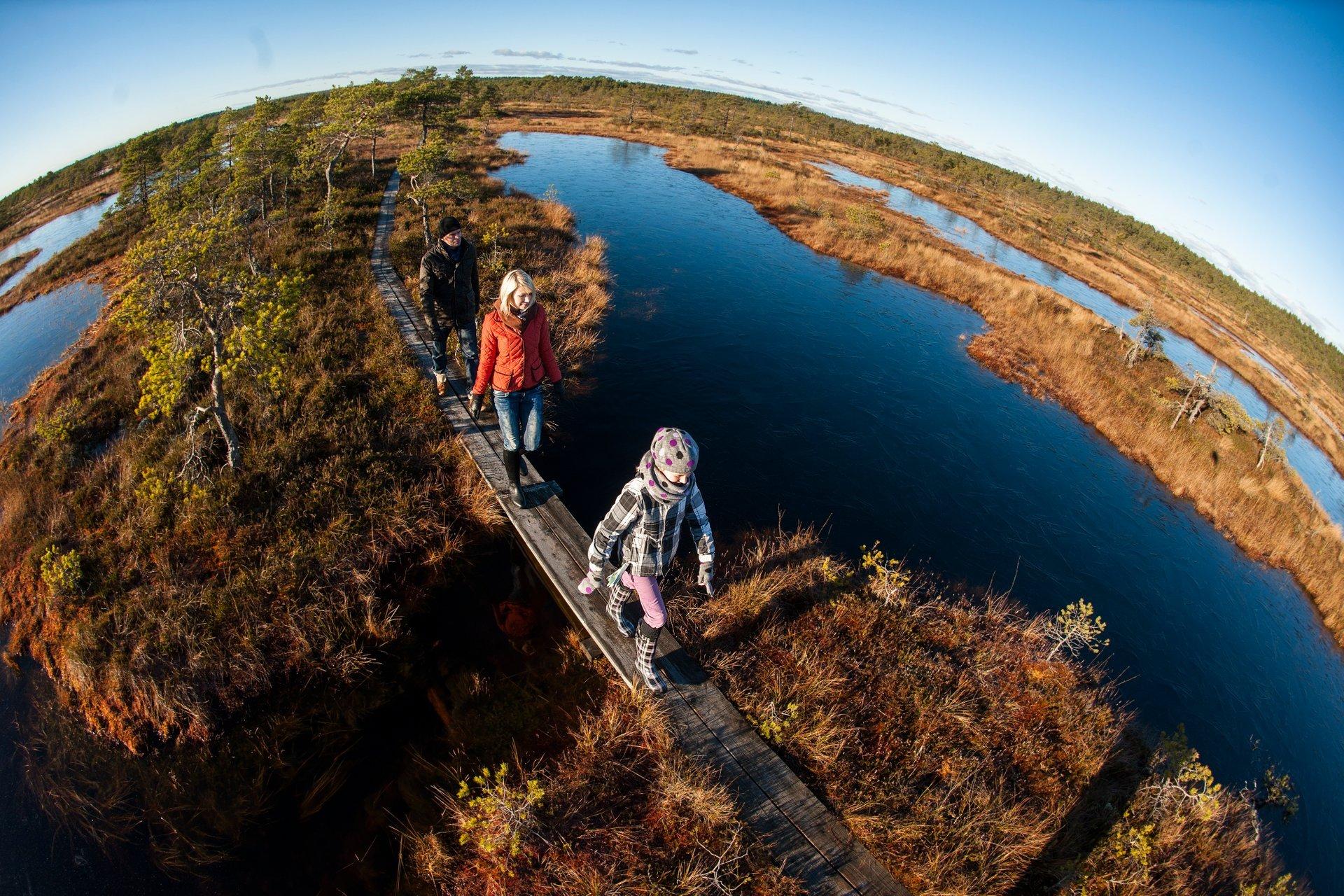 Bog Walking in Estonia 2020 - Best Time