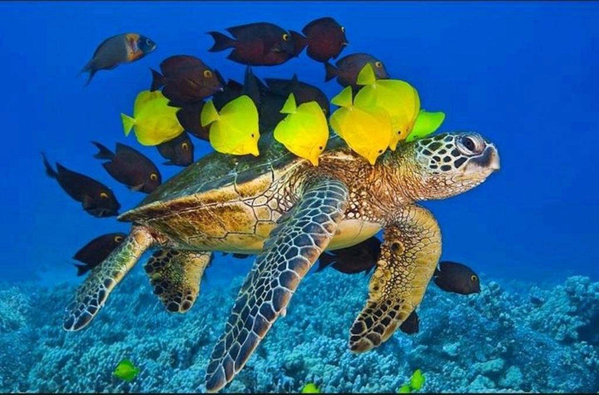 Scuba Diving in Vietnam - Best Season