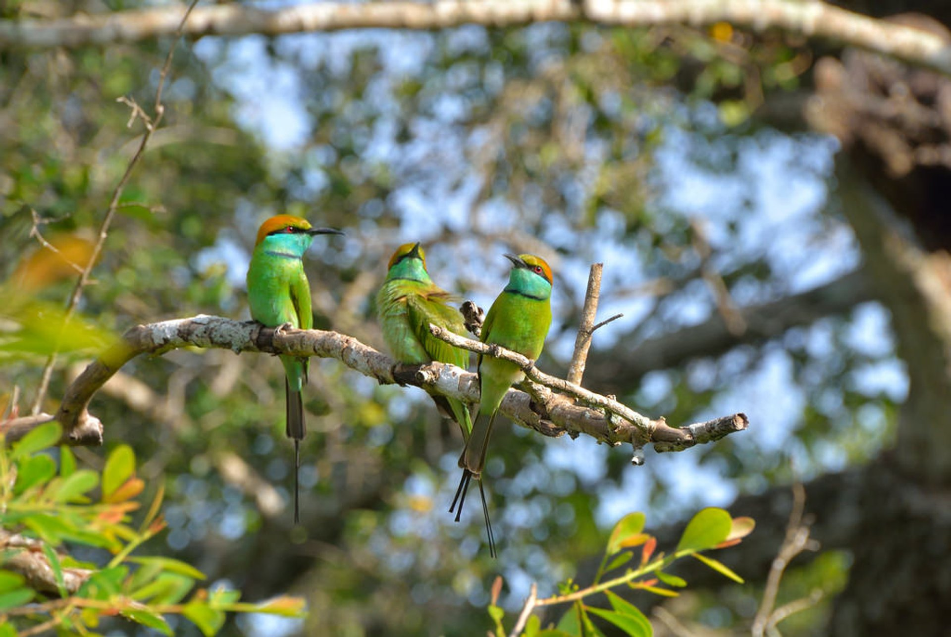 National Bird Watching Month in Sri Lanka 2019 - Best Time