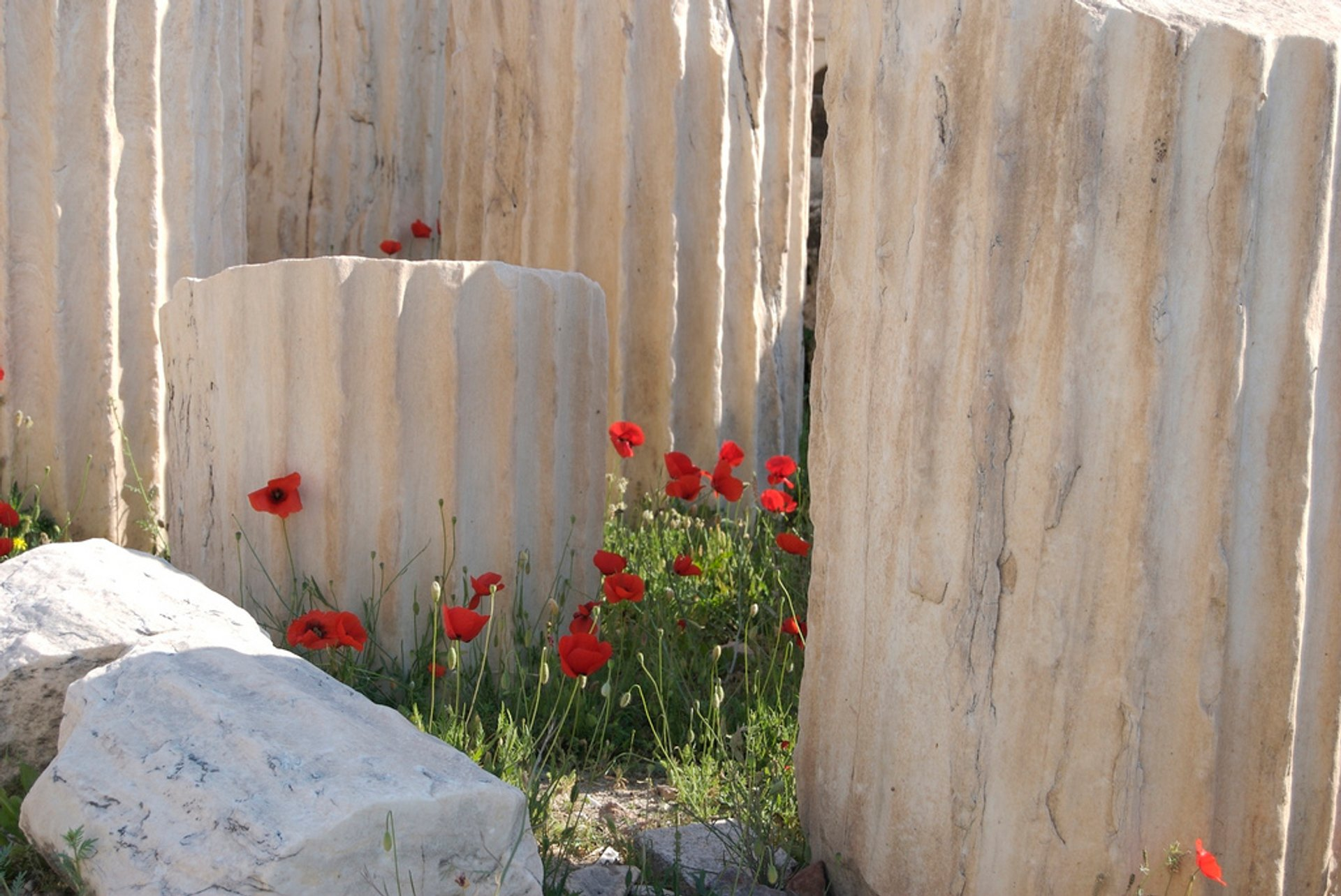 Wild Poppies at the Acropolis in Athens - Best Season