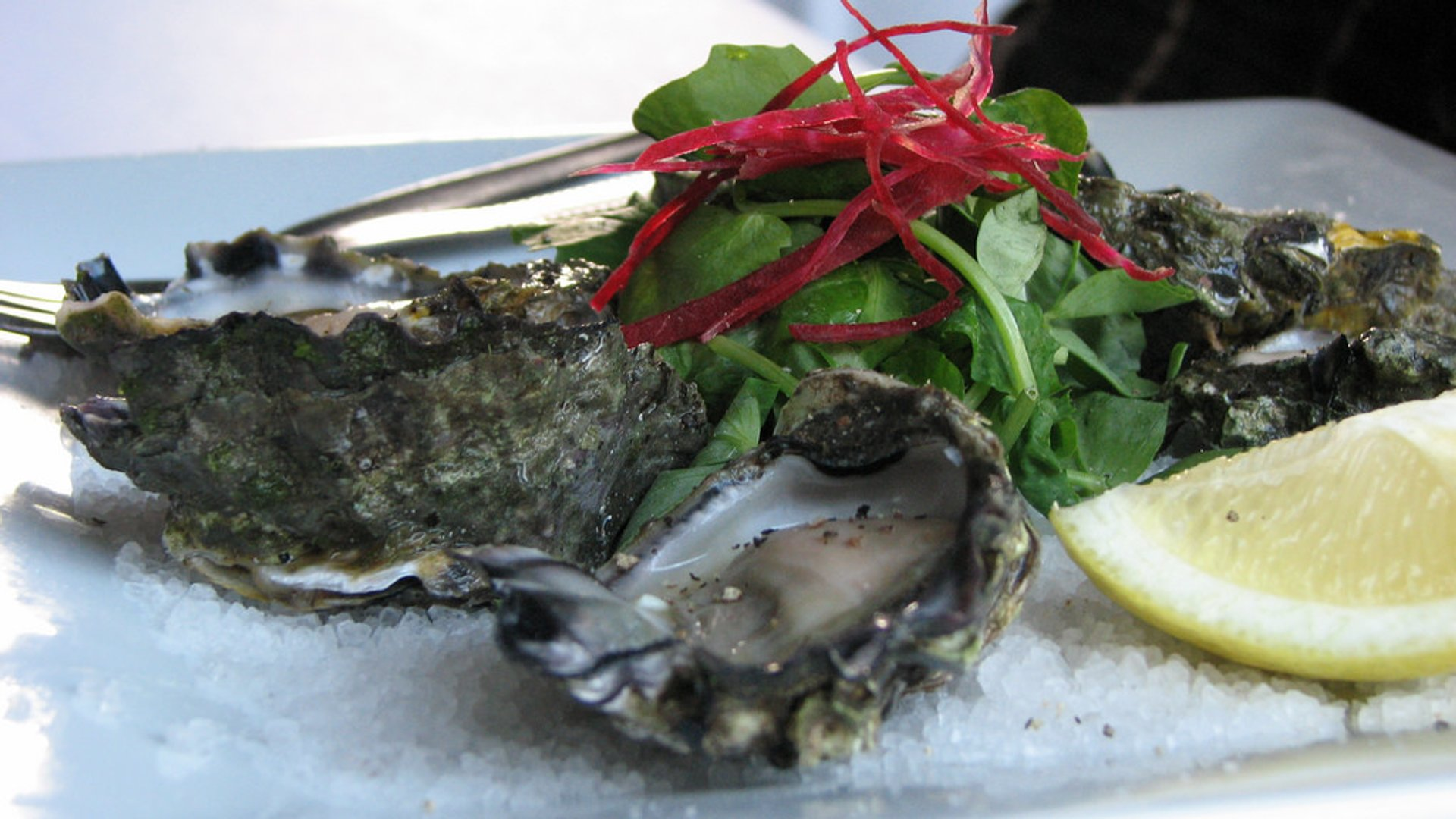 Best time for Sydney Rock Oyster in New South Wales