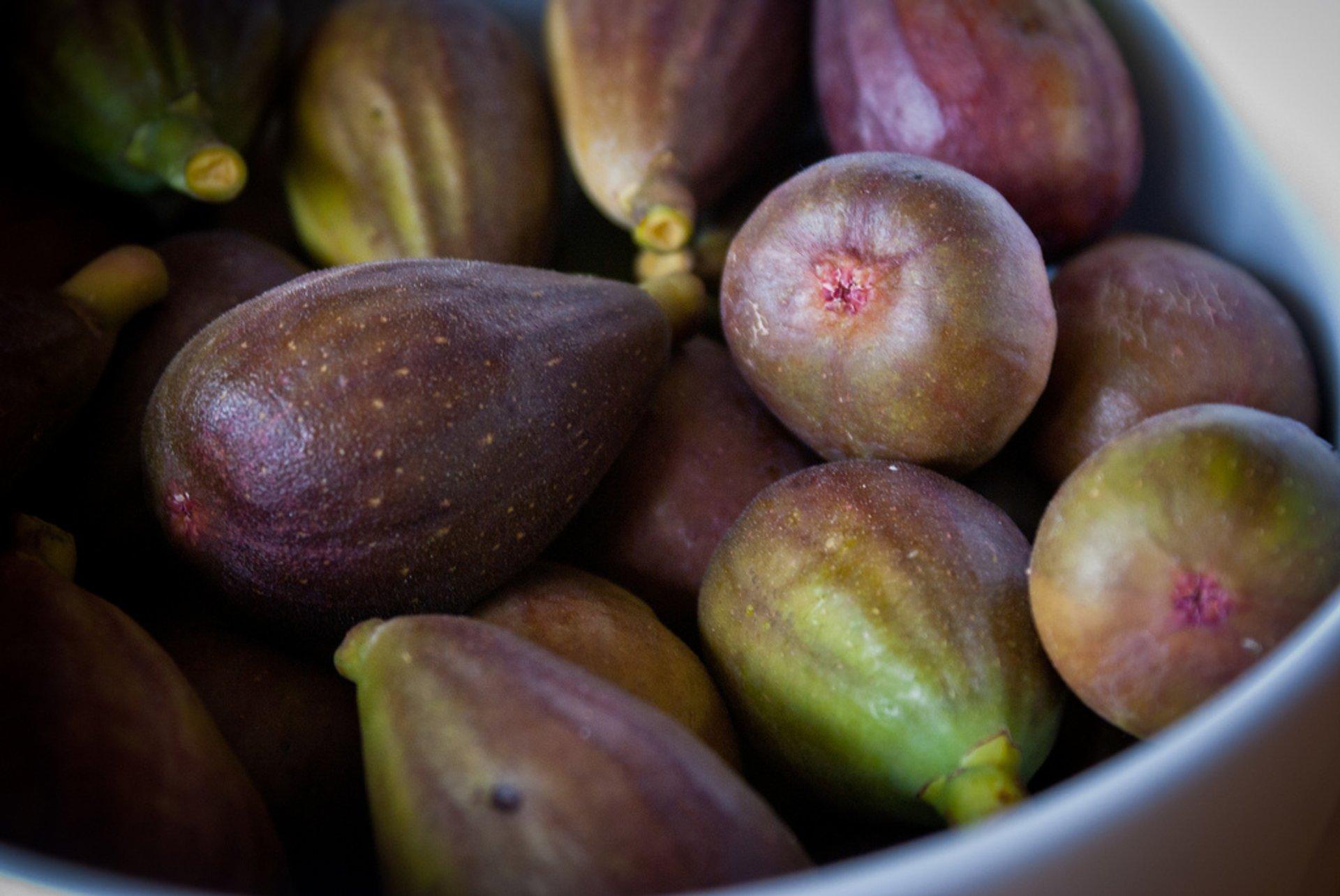 Figs: Farkizzan and Common Fig in Malta 2020 - Best Time