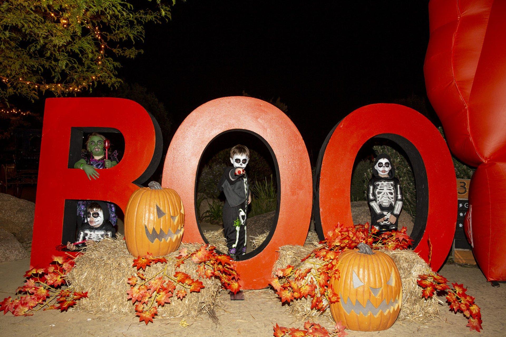 Boo at the Zoo - Werribee Open Range Zoo 2020