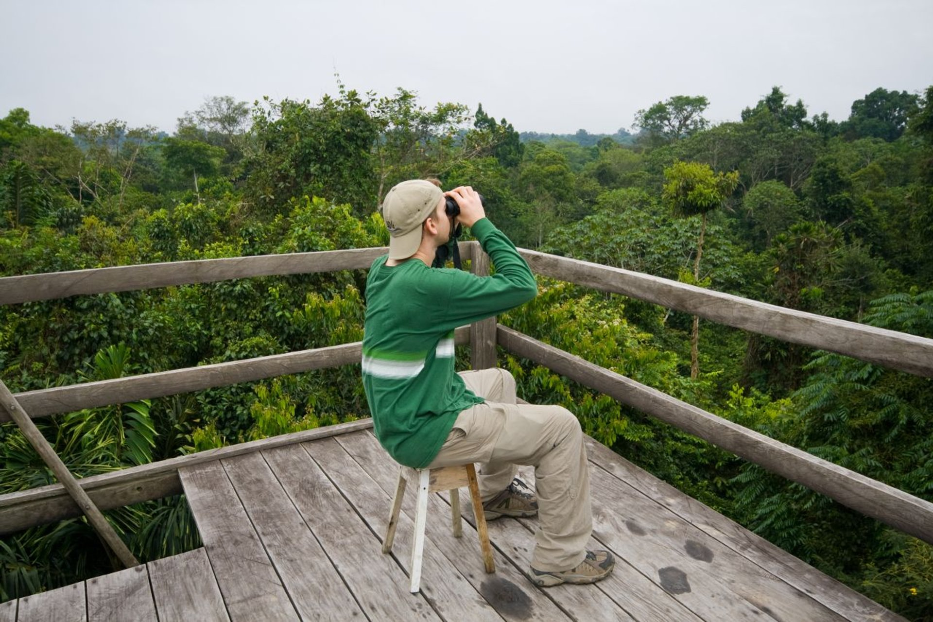 Canopy Watchtower—a 50-60 foot watch tower in the rainforest's canopy.  2019