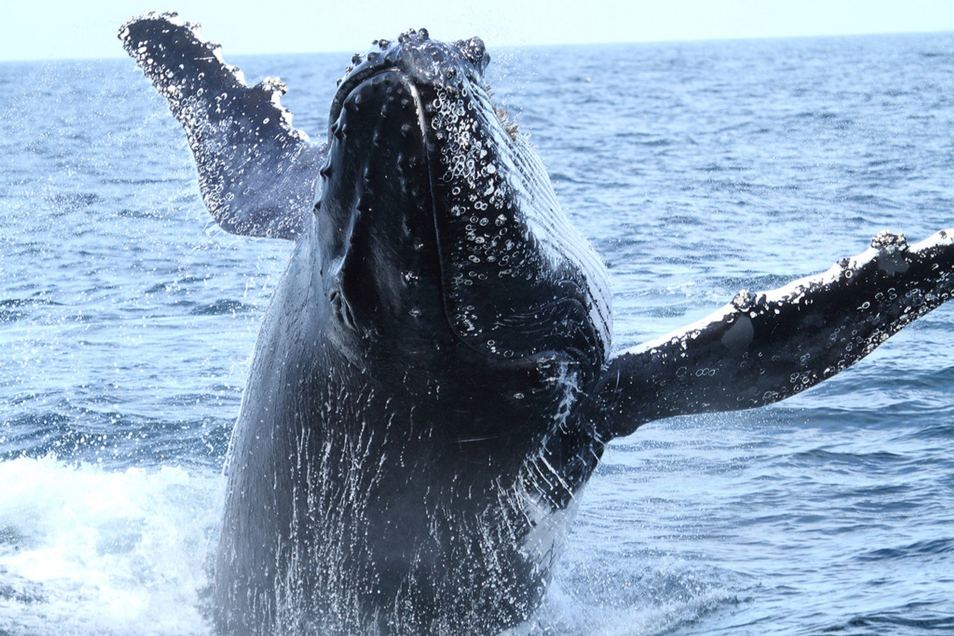 Whale Watching in NSW in New South Wales 2019 - Best Time