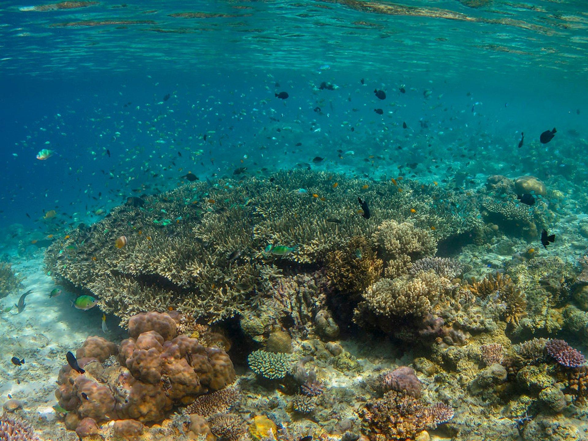 Mataking Coral 2020
