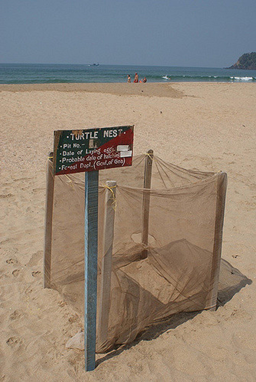 Agonda Beach 2020