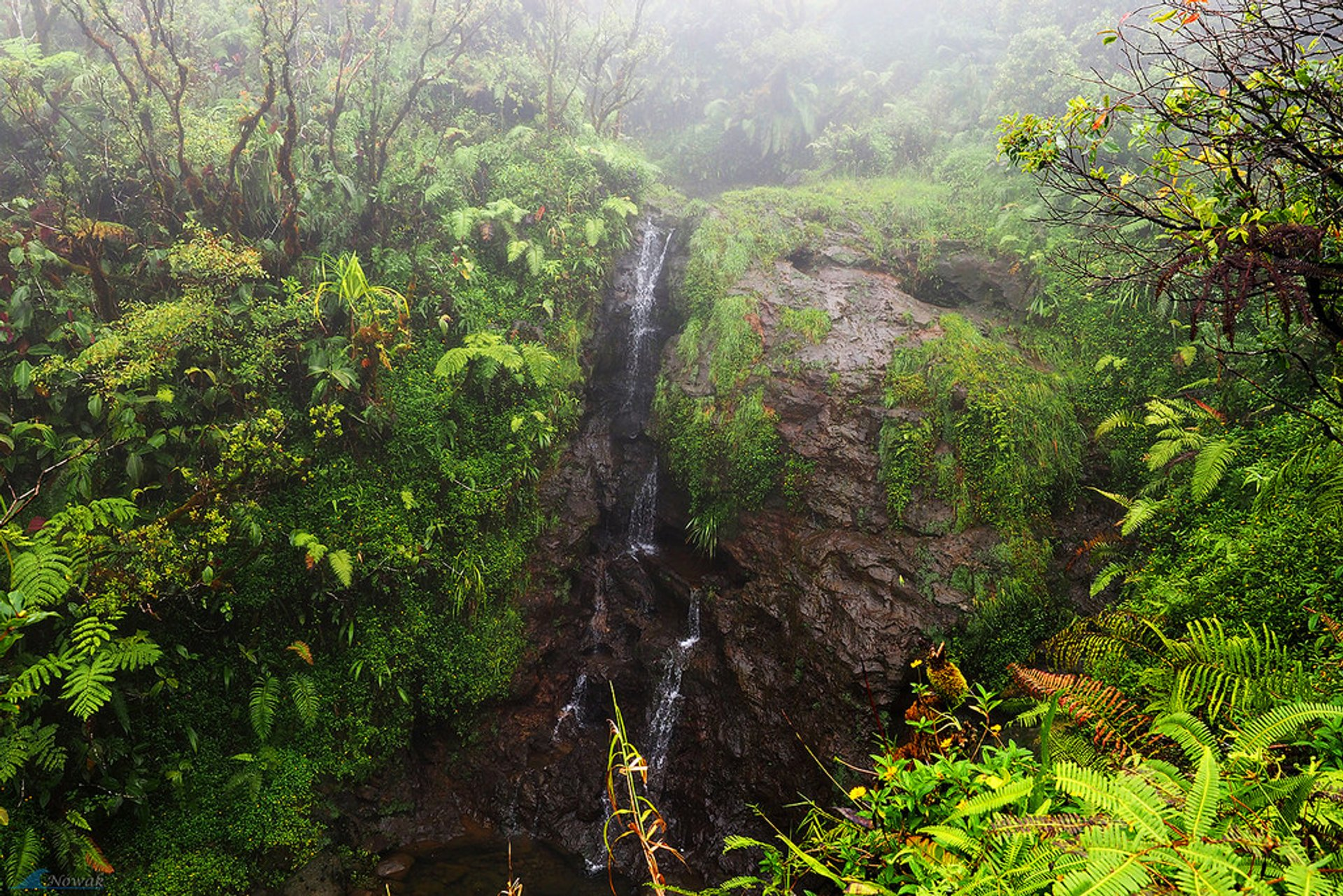 Small waterfall in the jungle during the one-day lava tube tour 2020