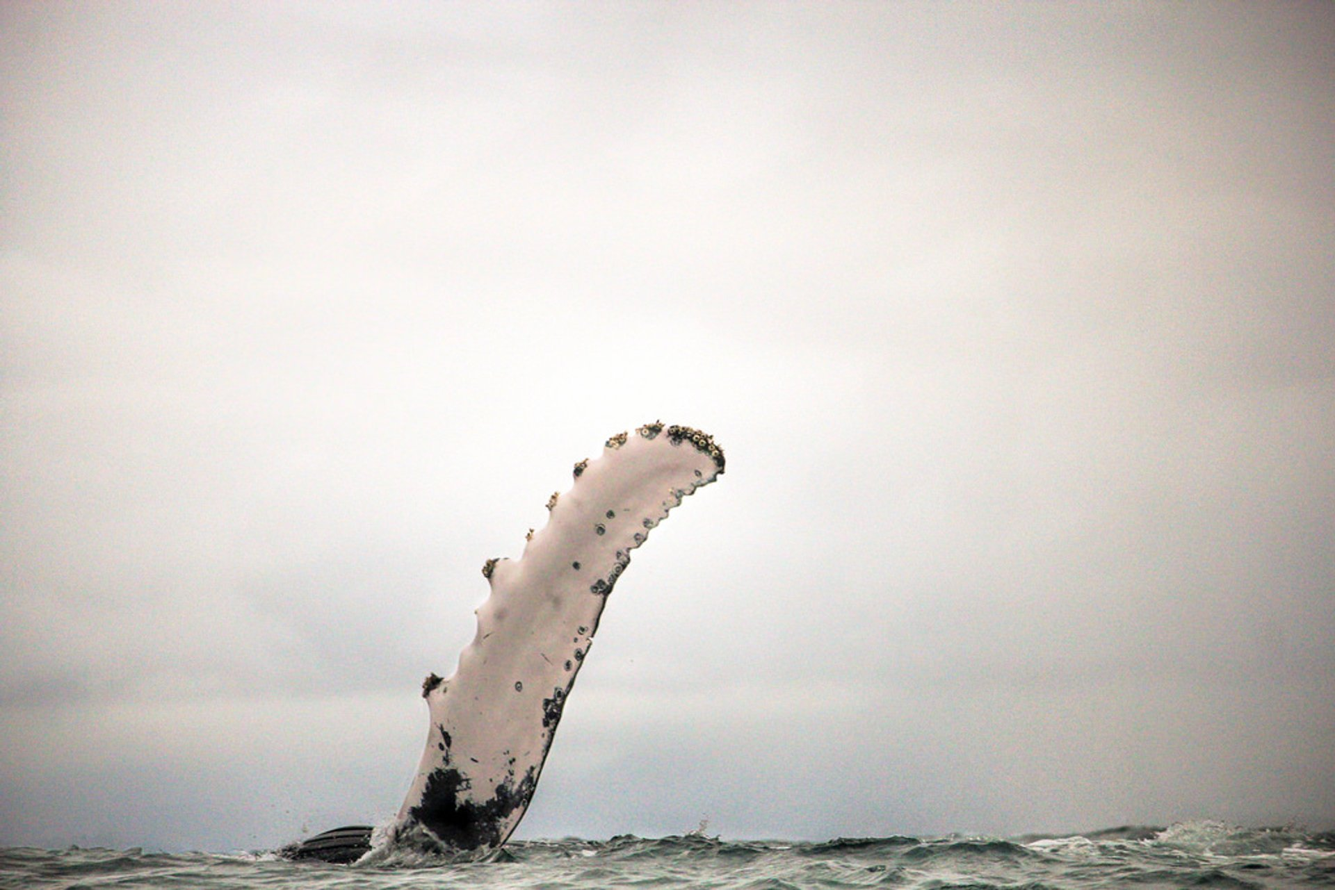 Best time for Humpback Whales in Colombia 2020