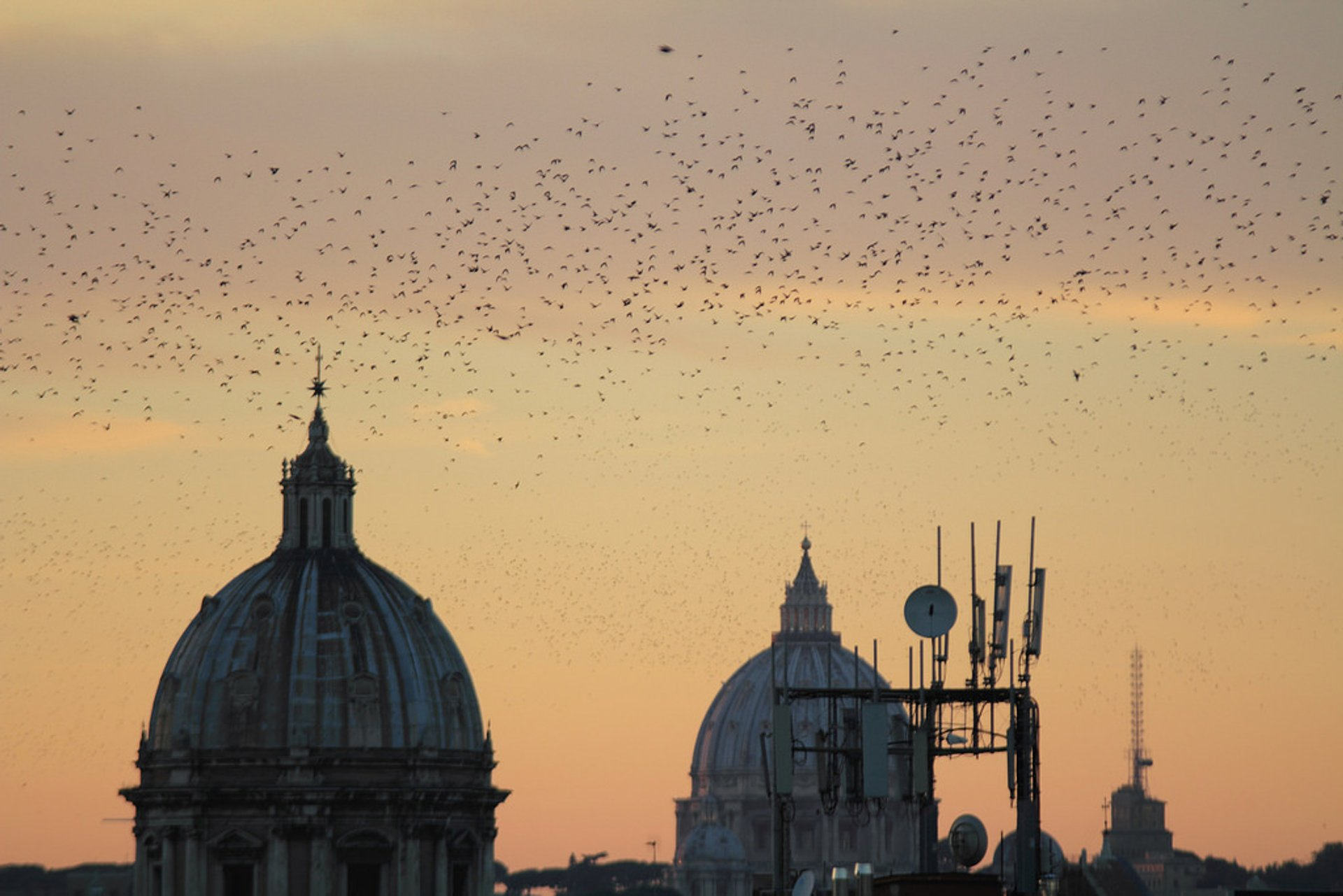 Starling Murmuration in Rome 2019 - Best Time
