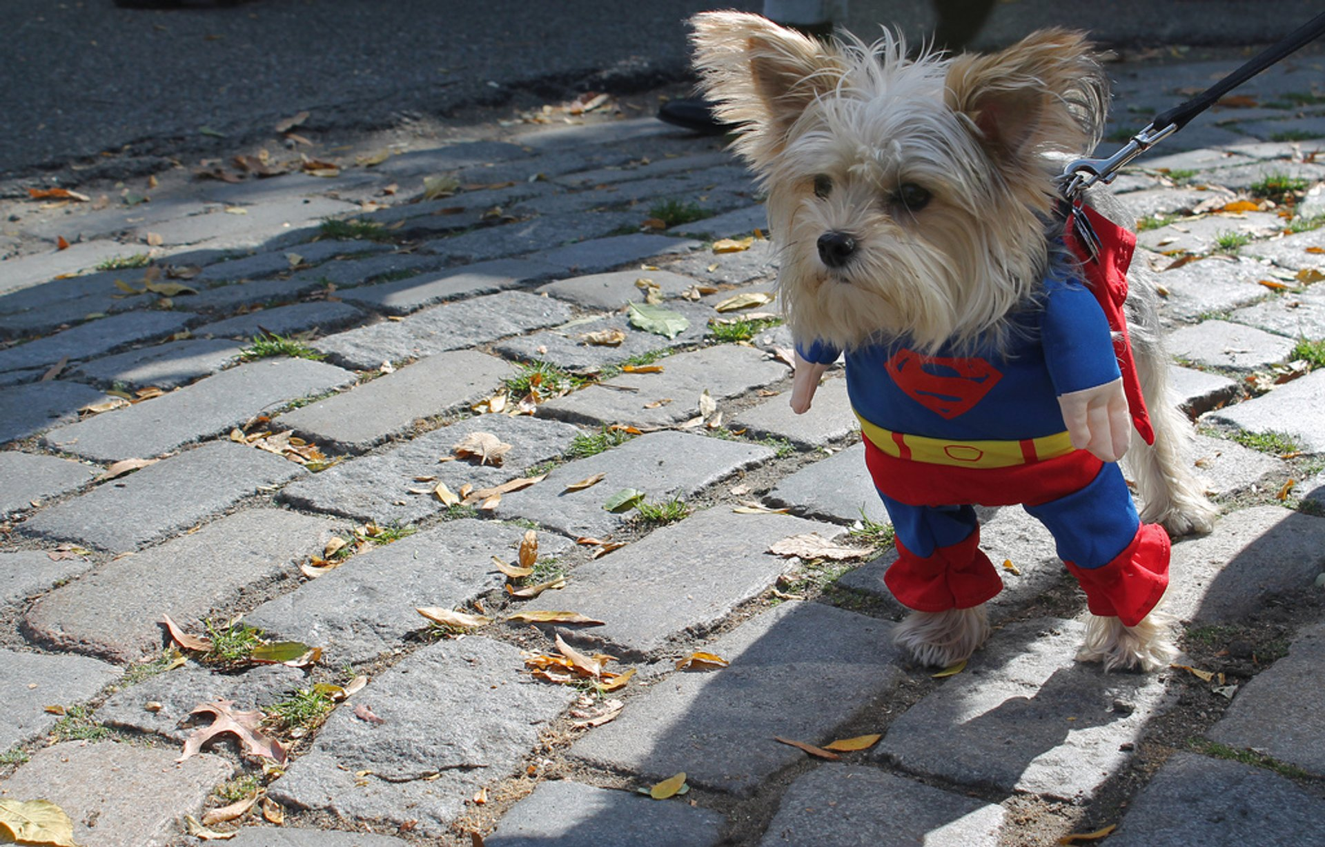 Tompkins Square Halloween Dog Parade in New York - Best Time