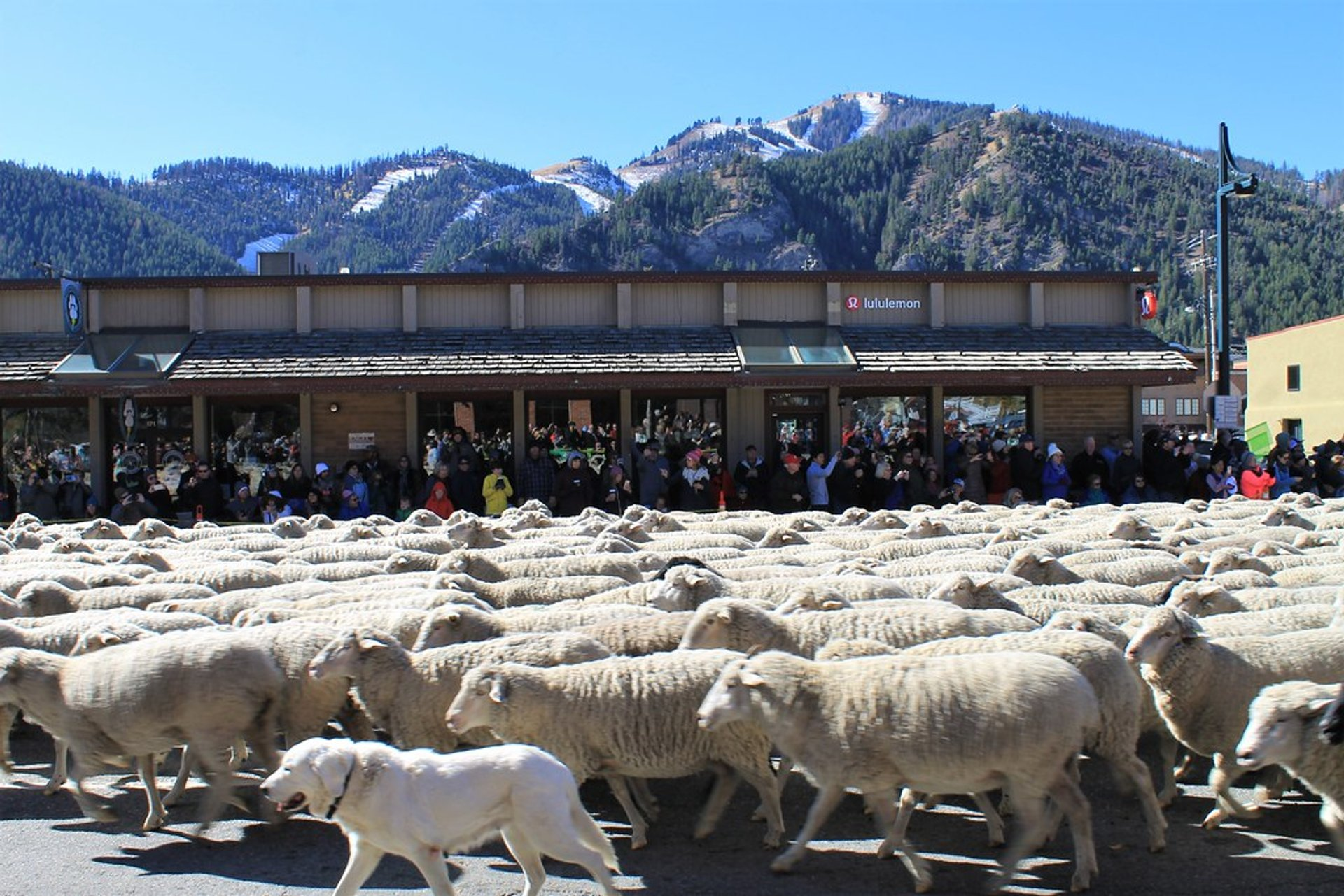 Best time for Trailing of the Sheep Festival in Idaho 2020
