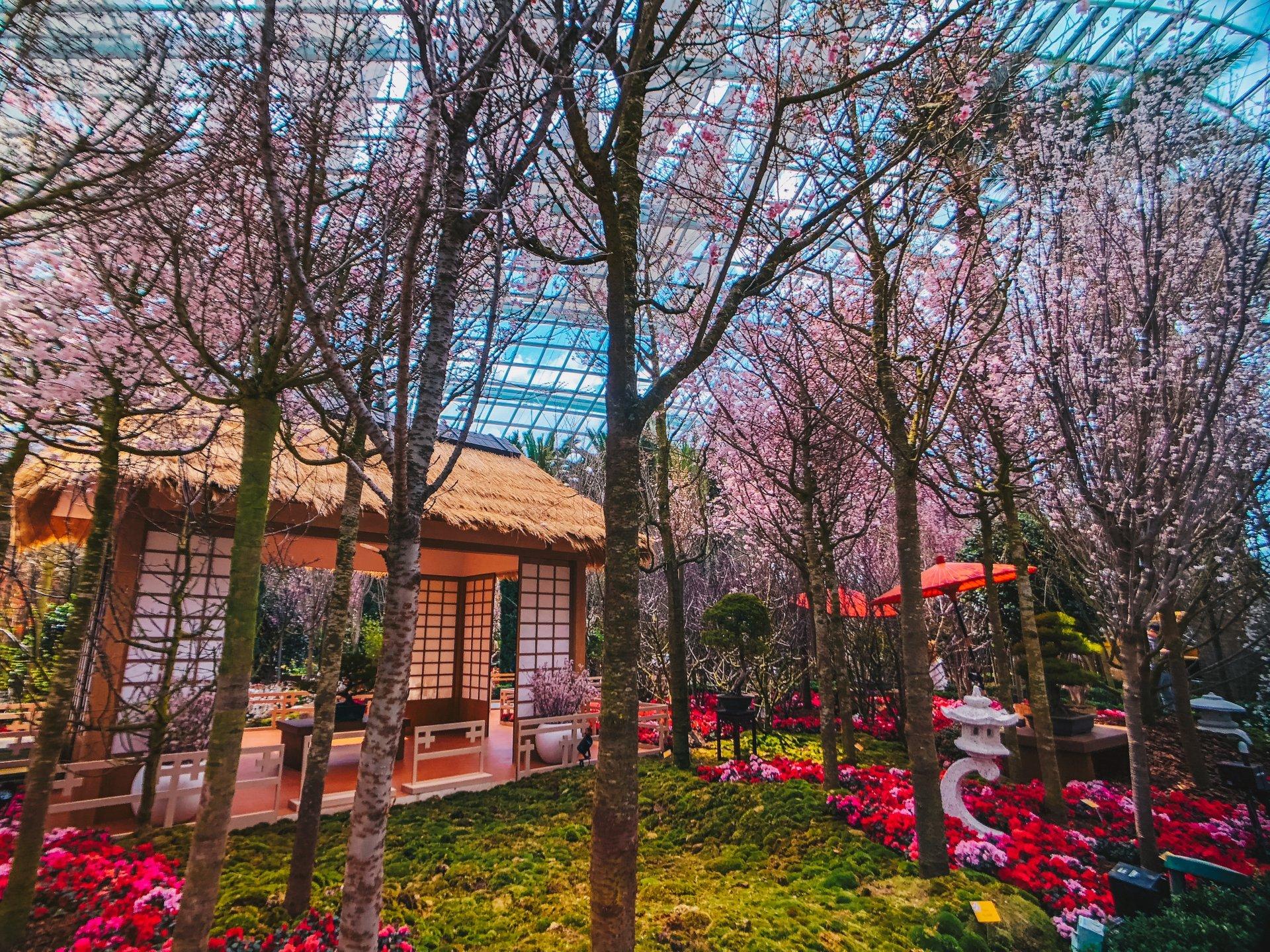 Sakura Matsuri Floral Display in Singapore - Best Season 2019