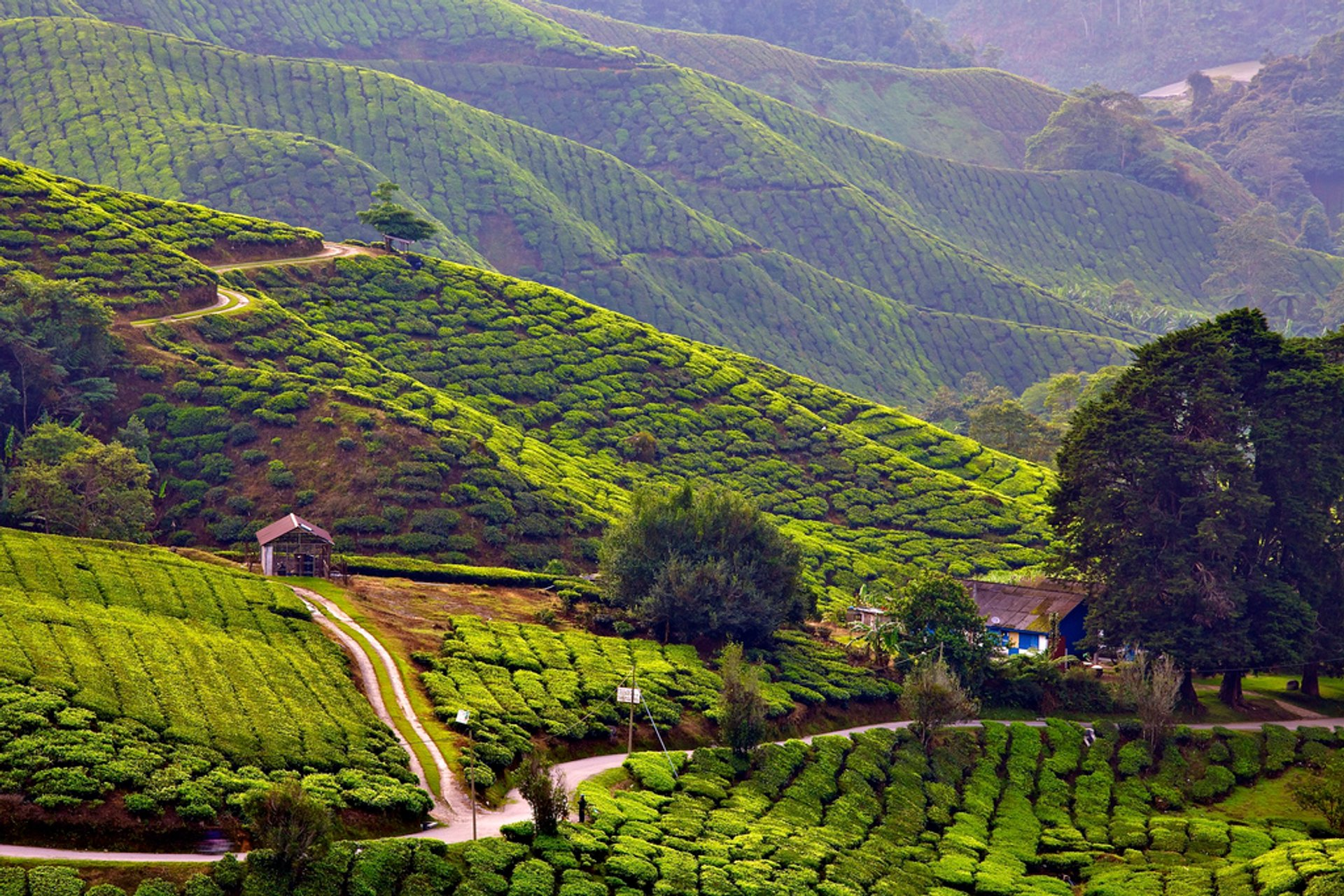Sungai Palas Tea Centre 2020