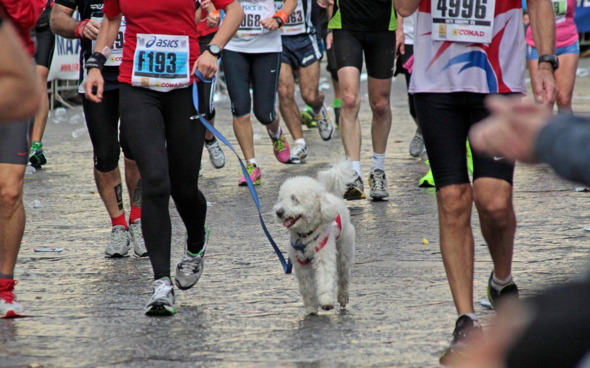 Florence Marathon (Maratona di Firenze) in Florence - Best Season 2020