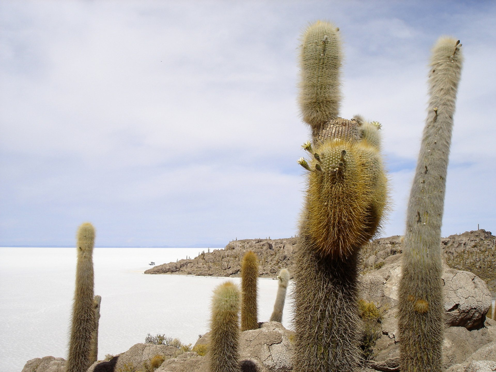 Best time for Blooming Cacti in Bolivia 2019