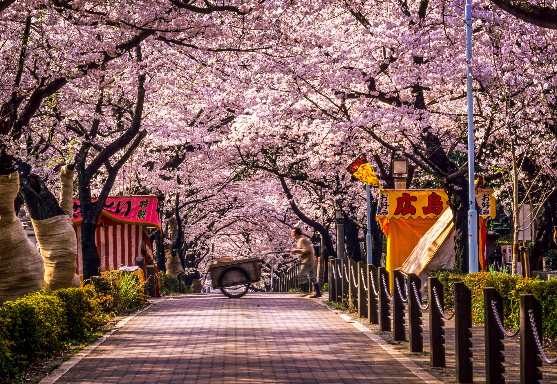 Aoyama Cemetary Tokyo 2020