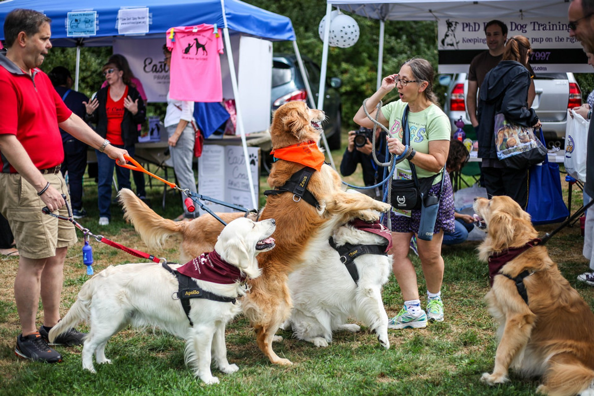 Woofstock Festival in Toronto - Best Season 2020