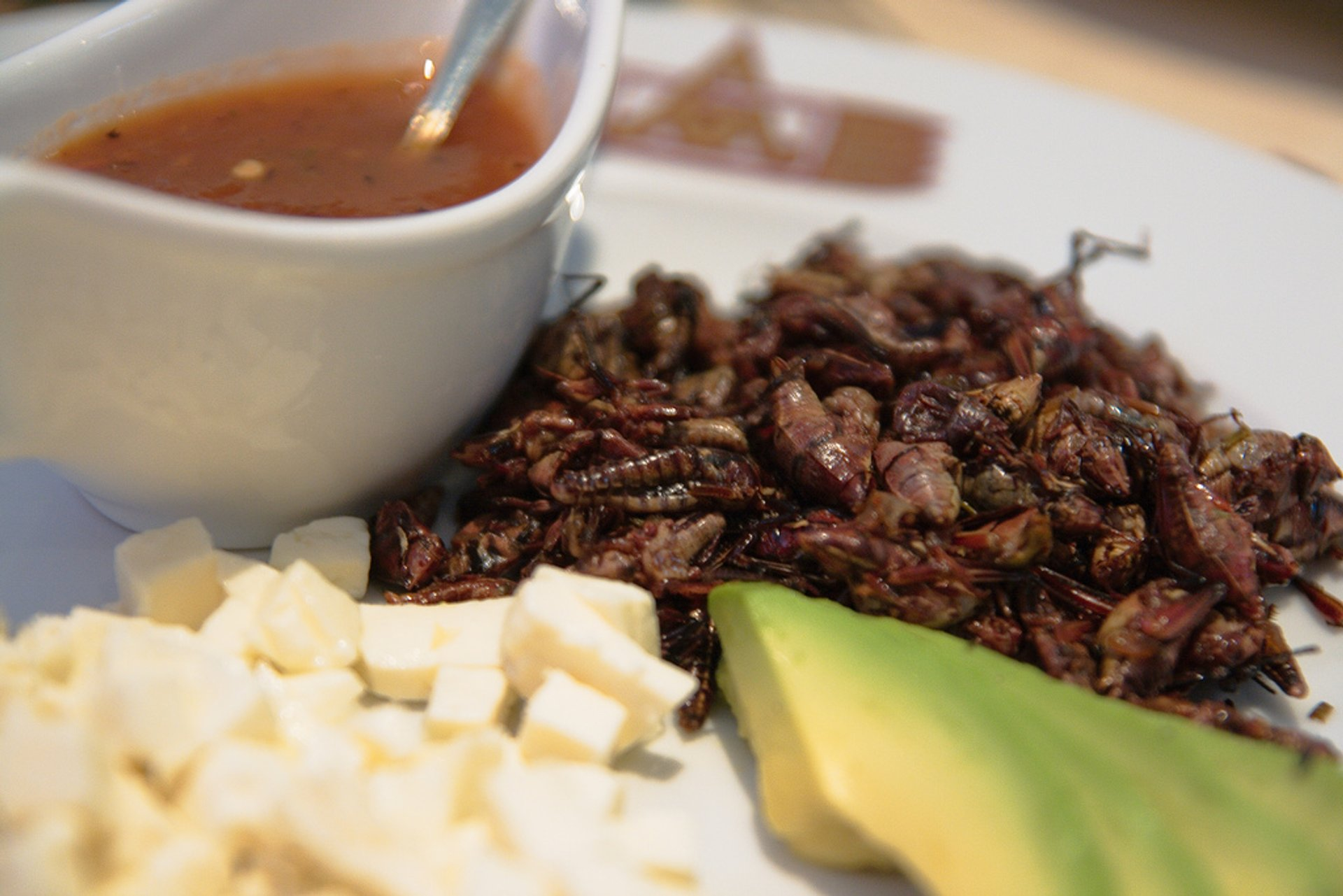 Best time for Chapulines or Grasshoppers in Mexico 2019