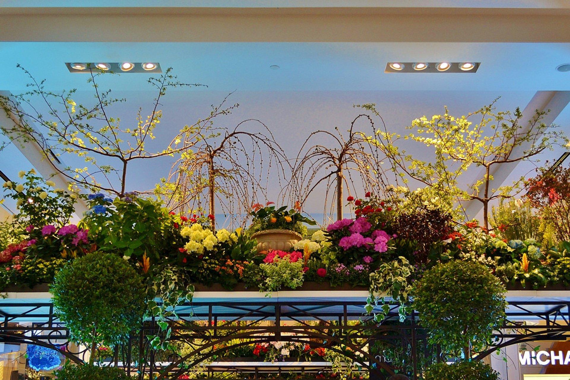 Macy's Flower Show in New York - Best Season 2020