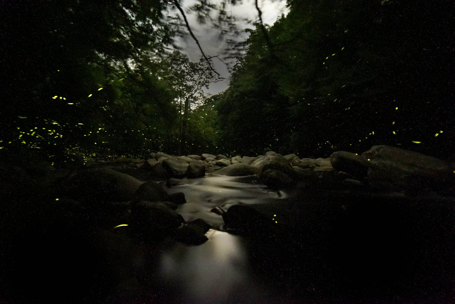 Synchronous Fireflies in Tennessee 2019 - Best Time