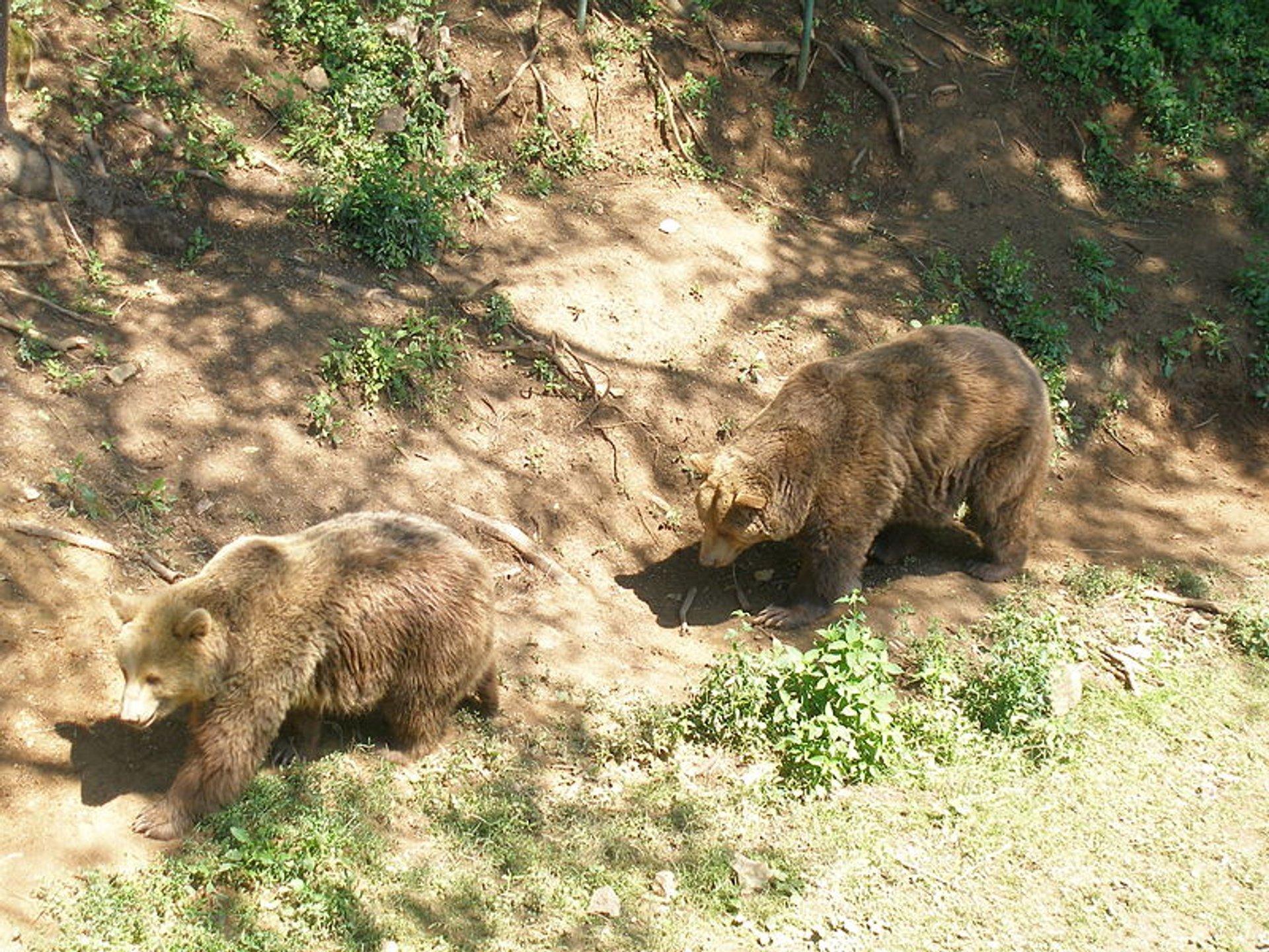 Bear Watching in Slovakia - Best Season 2020