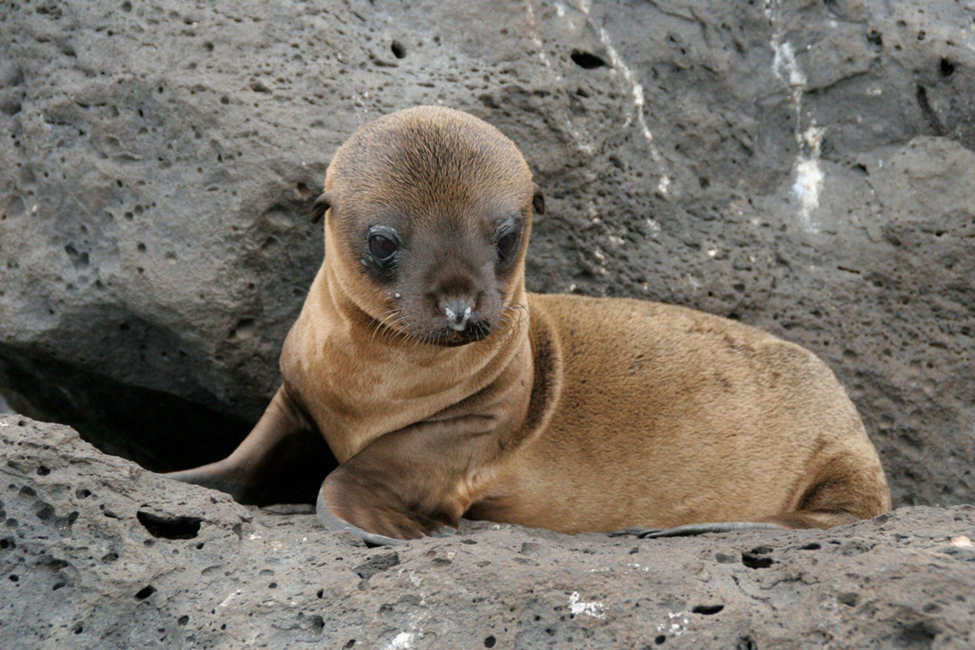 Baby Sea Lion in Puerto Ayora, Galapagos, Ecuador 2020