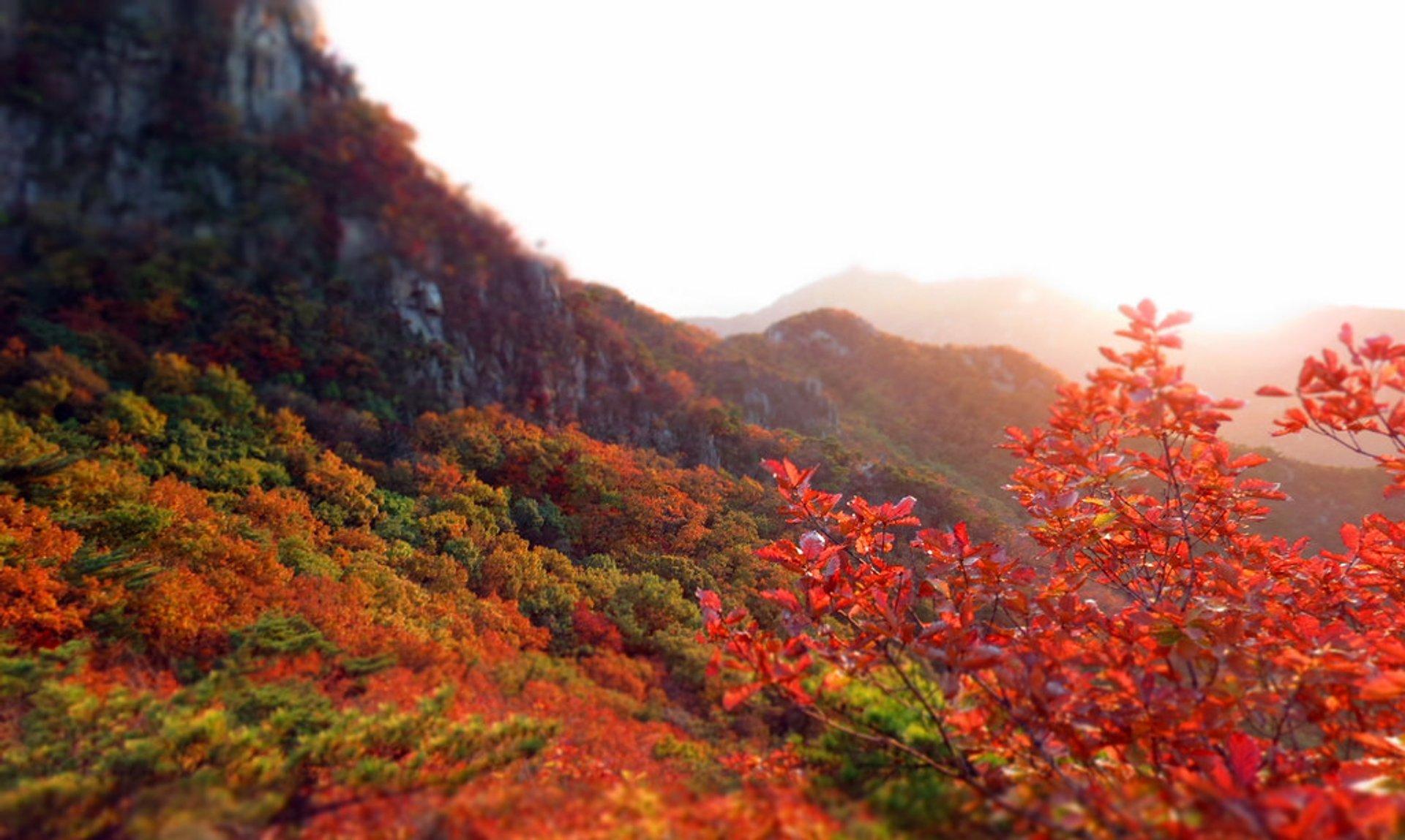 Autumn at Gwanaksan (Seoul, Korea) 2019
