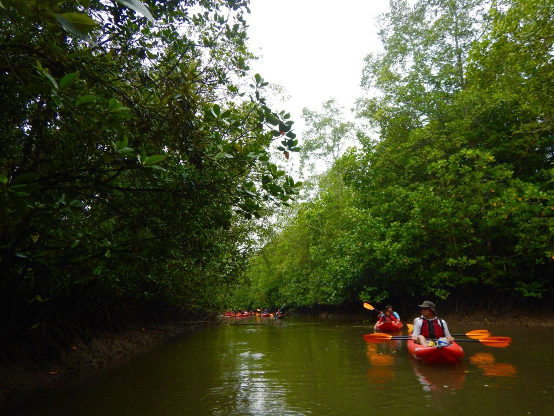 Kayak Through a Mangrove Forest in Singapore - Best Time