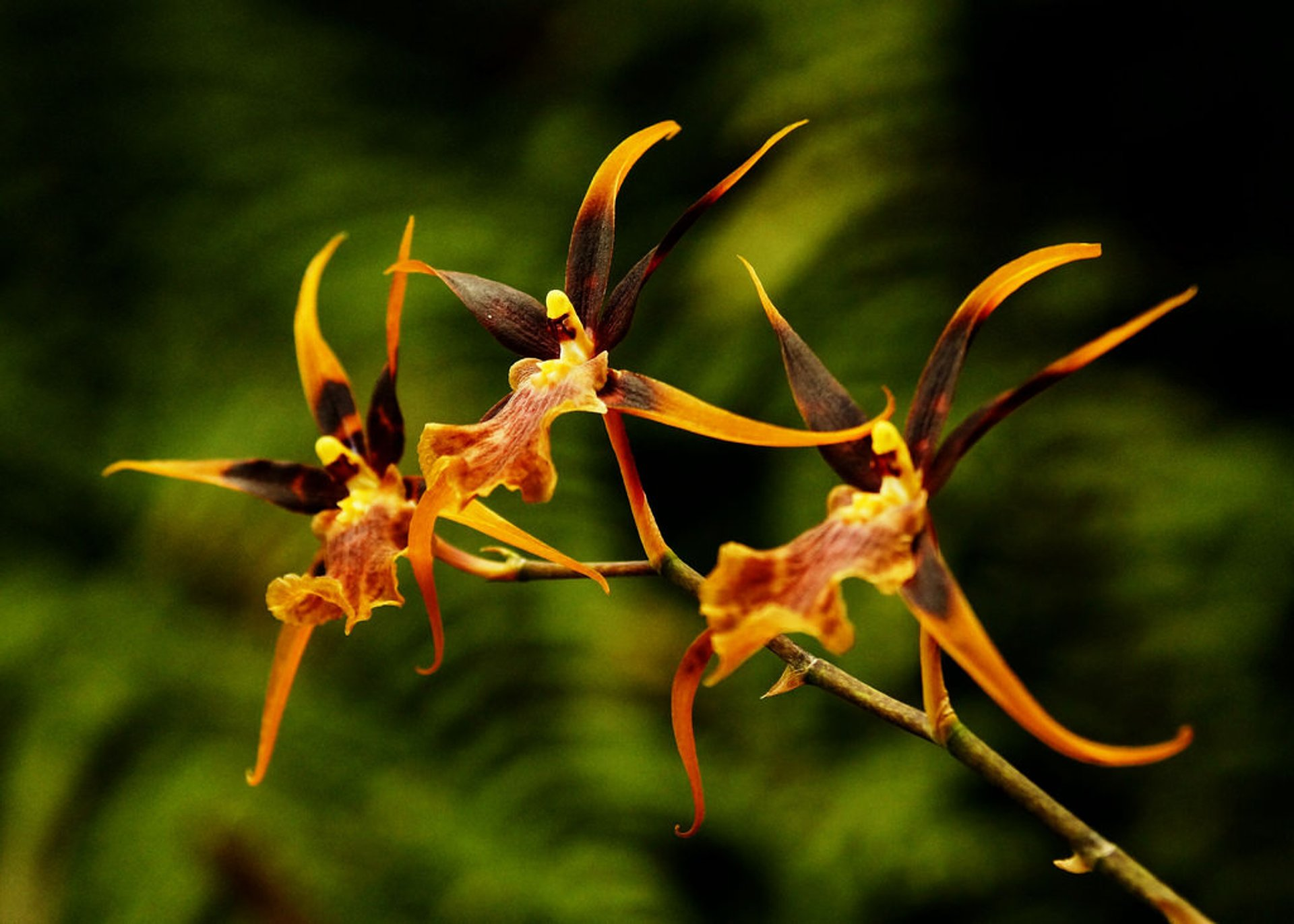Orchid Bloom in Madeira - Best Season 2019