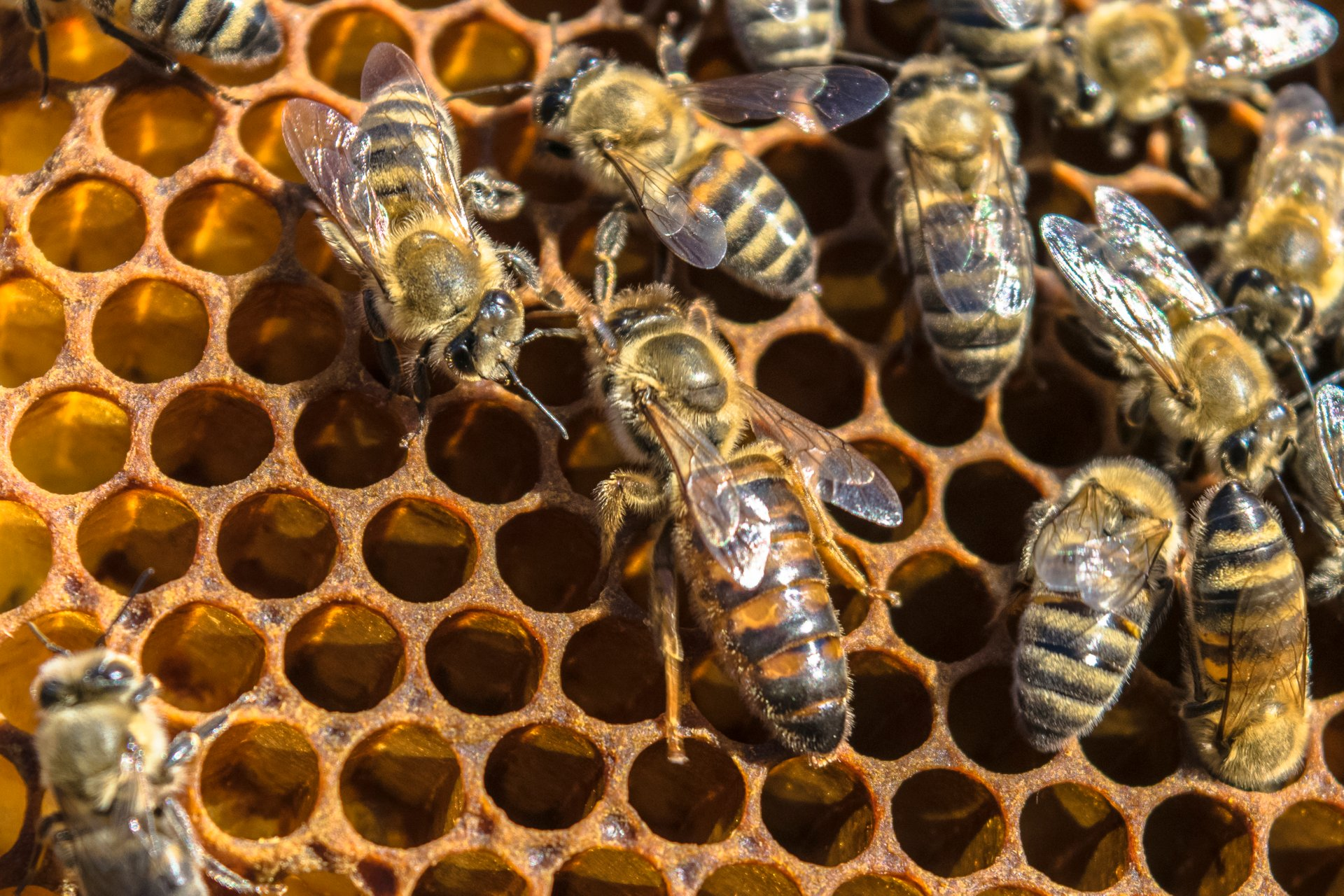 Best time for Honey Season 2020