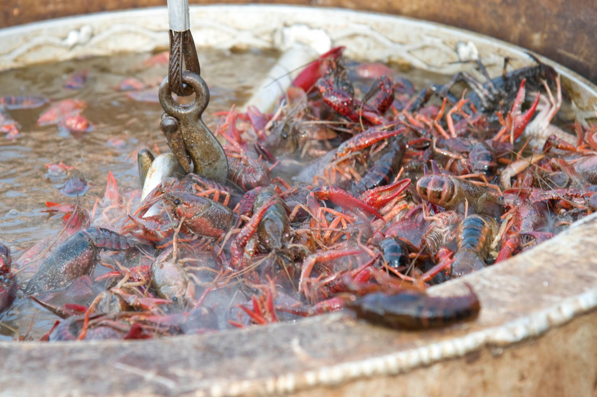 Best time for Mudbug Madness Festival in Louisiana 2020