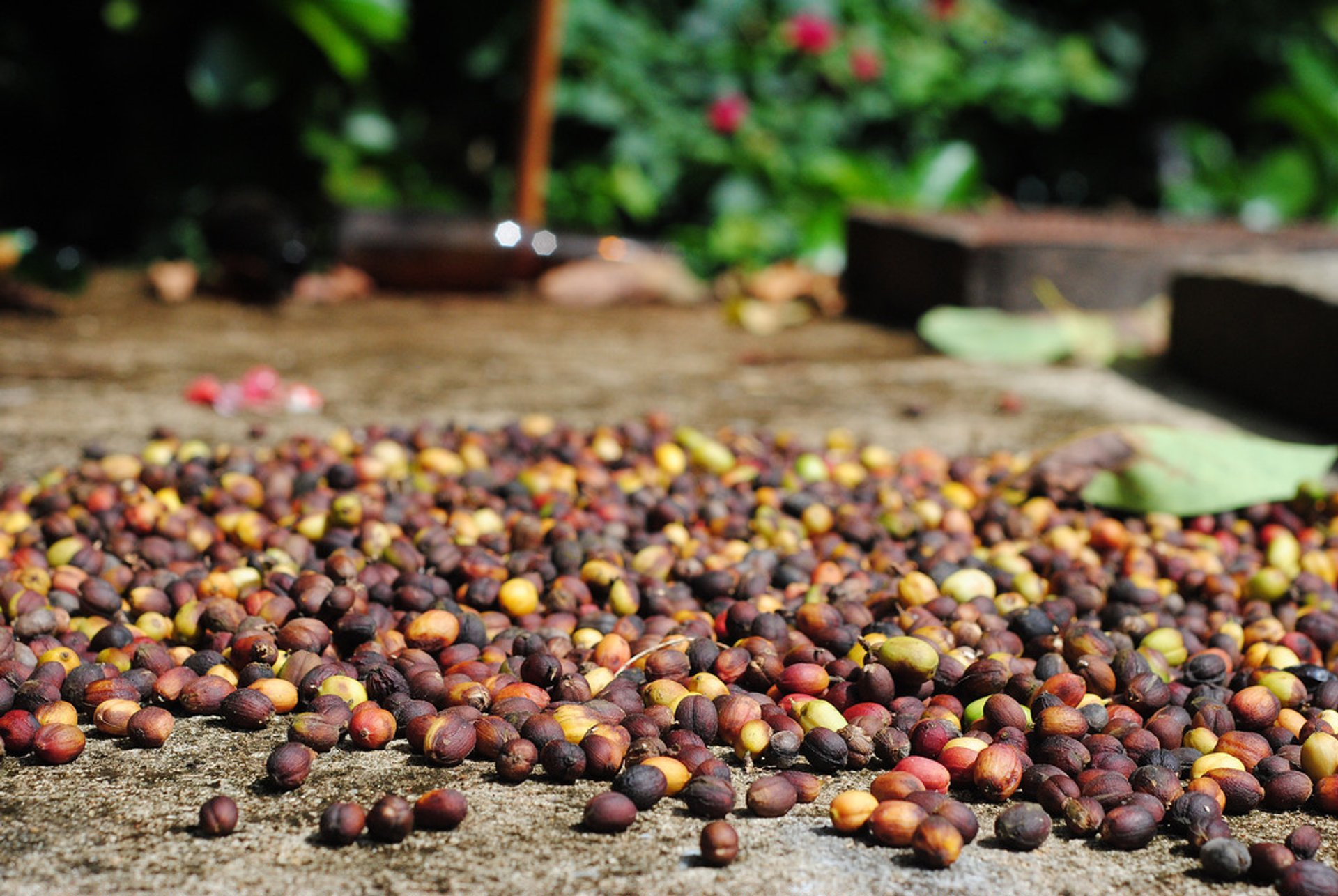 Coffee beans 2020