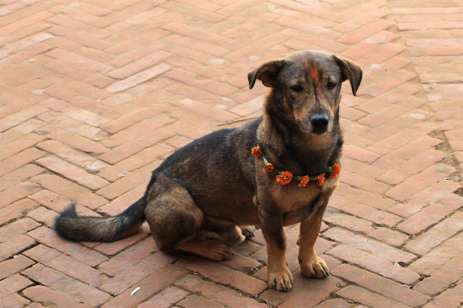 Kukur Tihar, Nepal Dog Festival in Kathmandu - Best Season