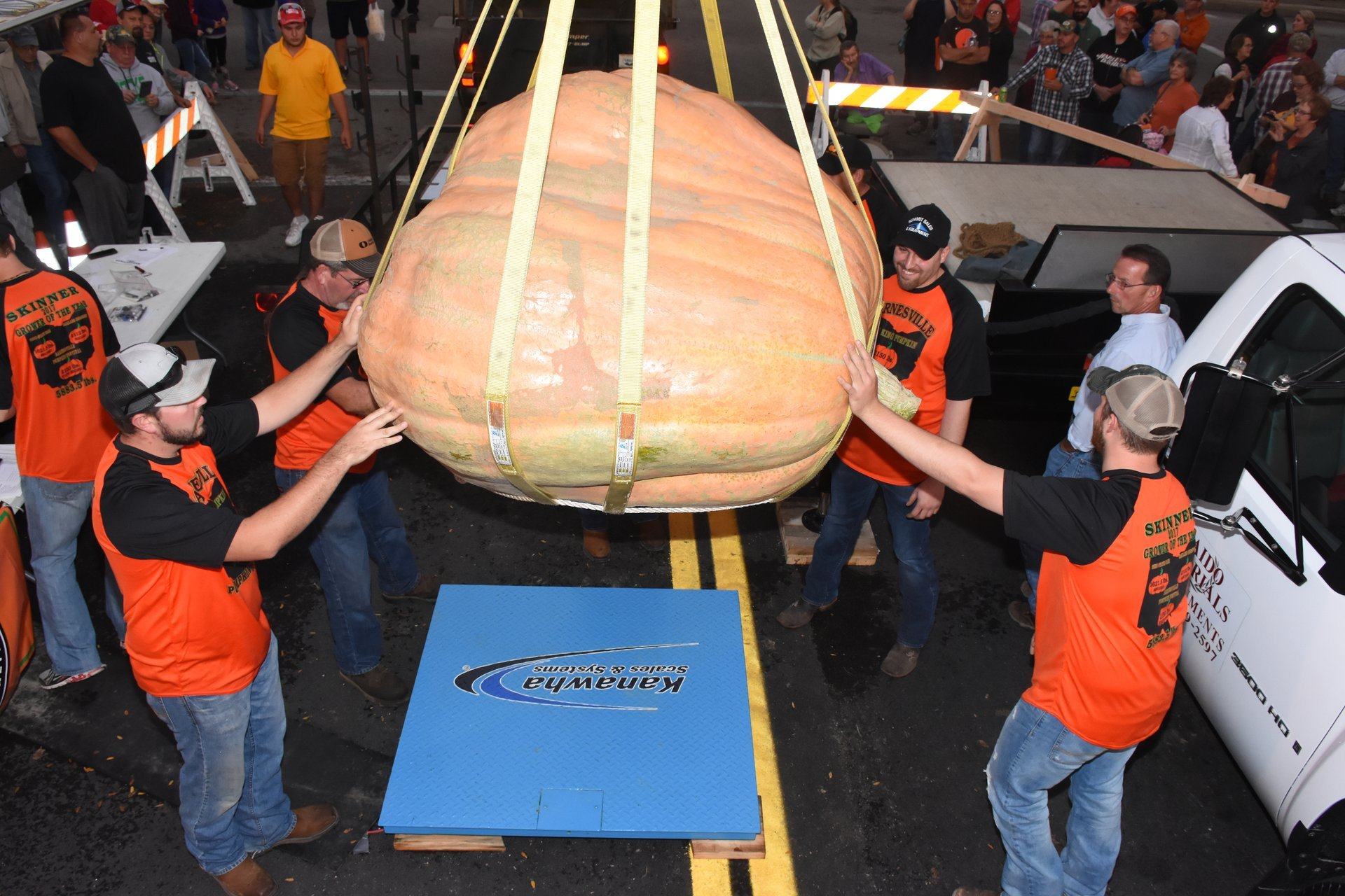 Weighing in the pumpkins on Wednesday evening 2020