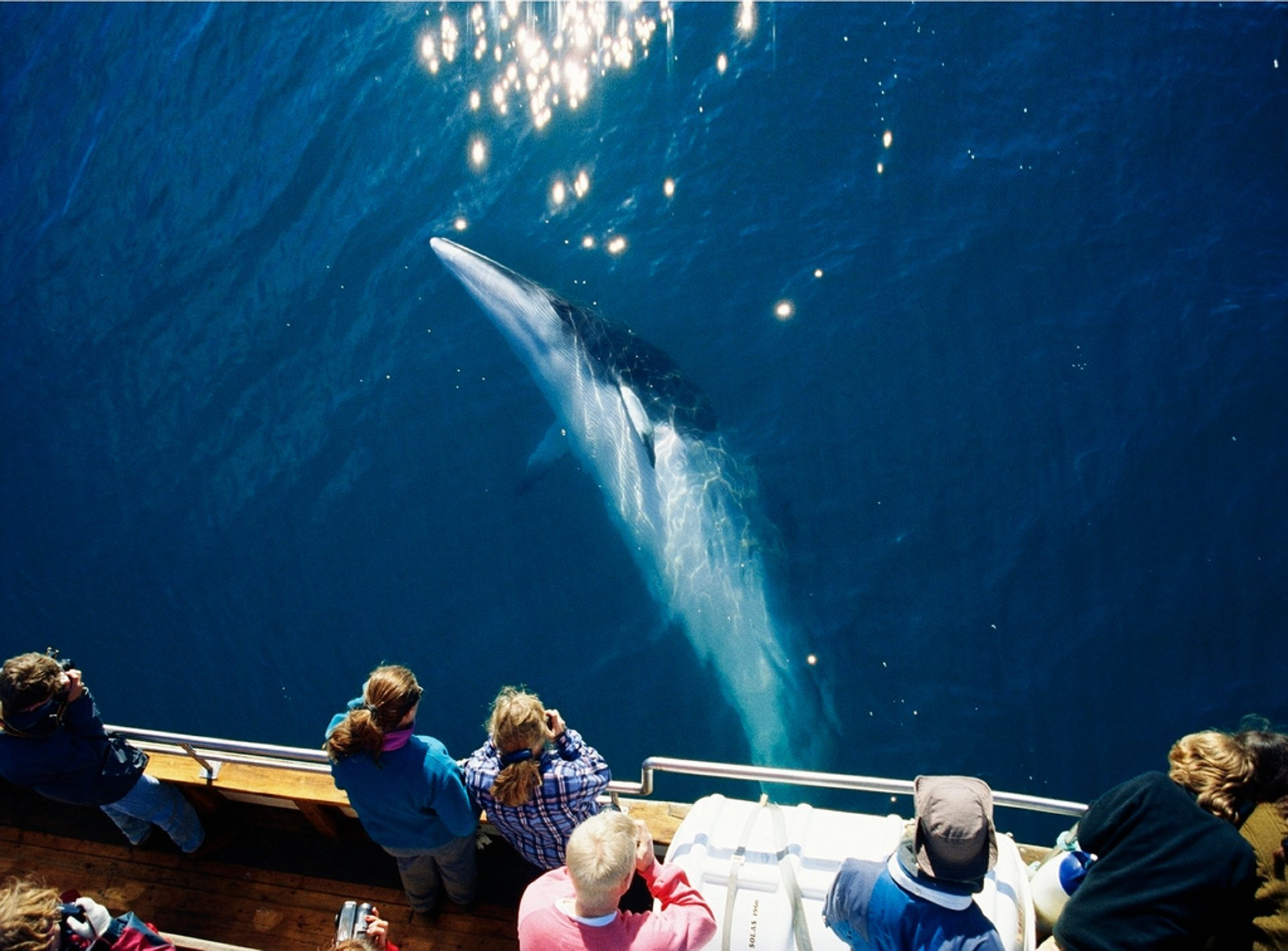 Whale Watching in Iceland - Best Season 2020