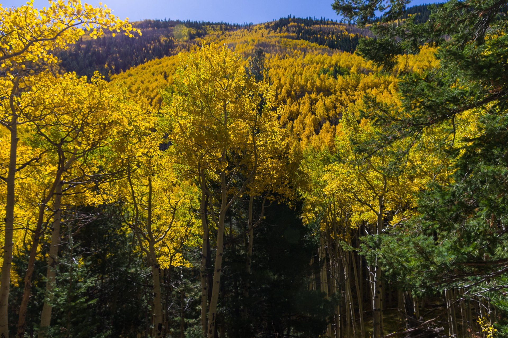 Fall color on Inner Basin Trail 2020