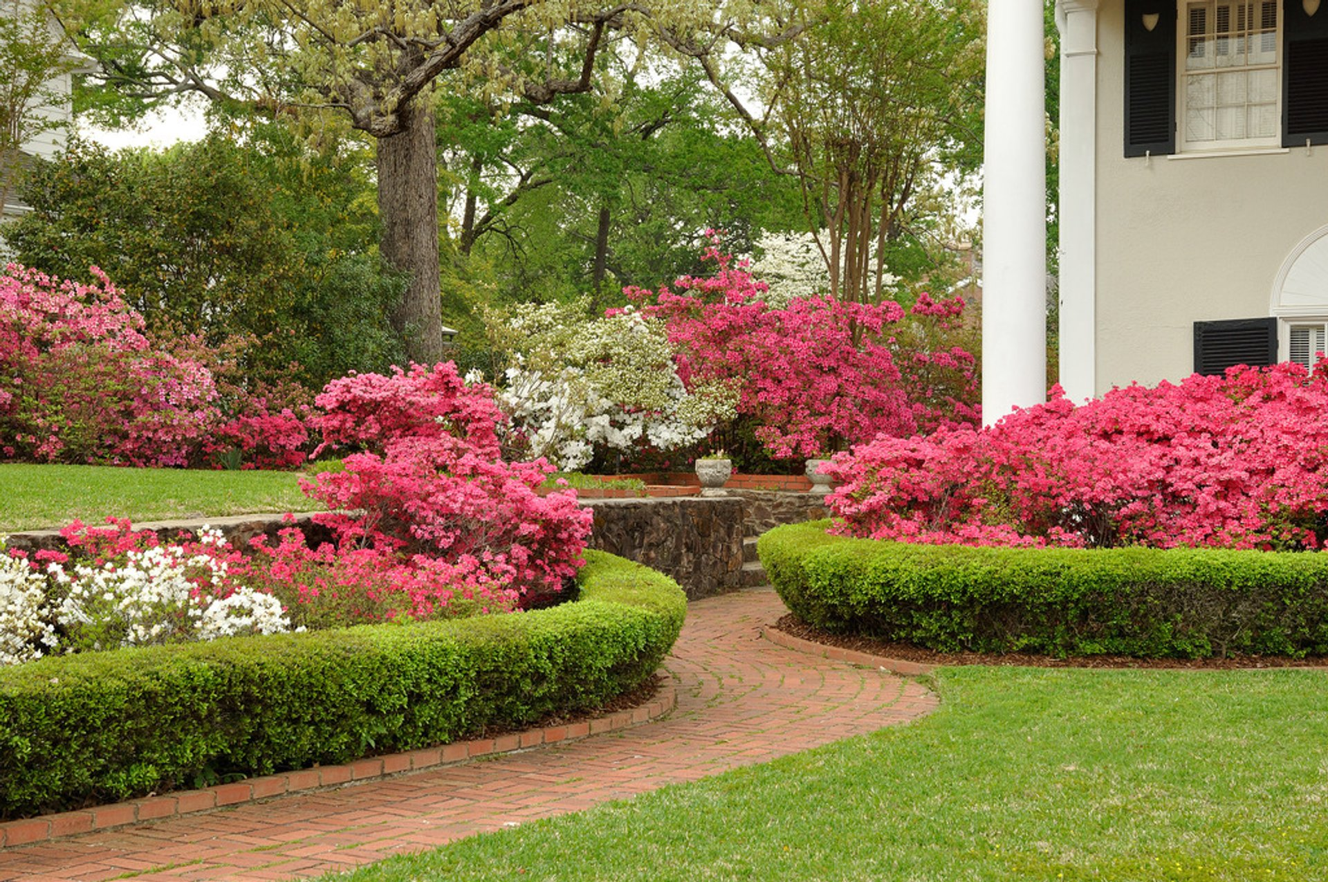 Azalea Bloom in Tyler in Texas - Best Season 2019