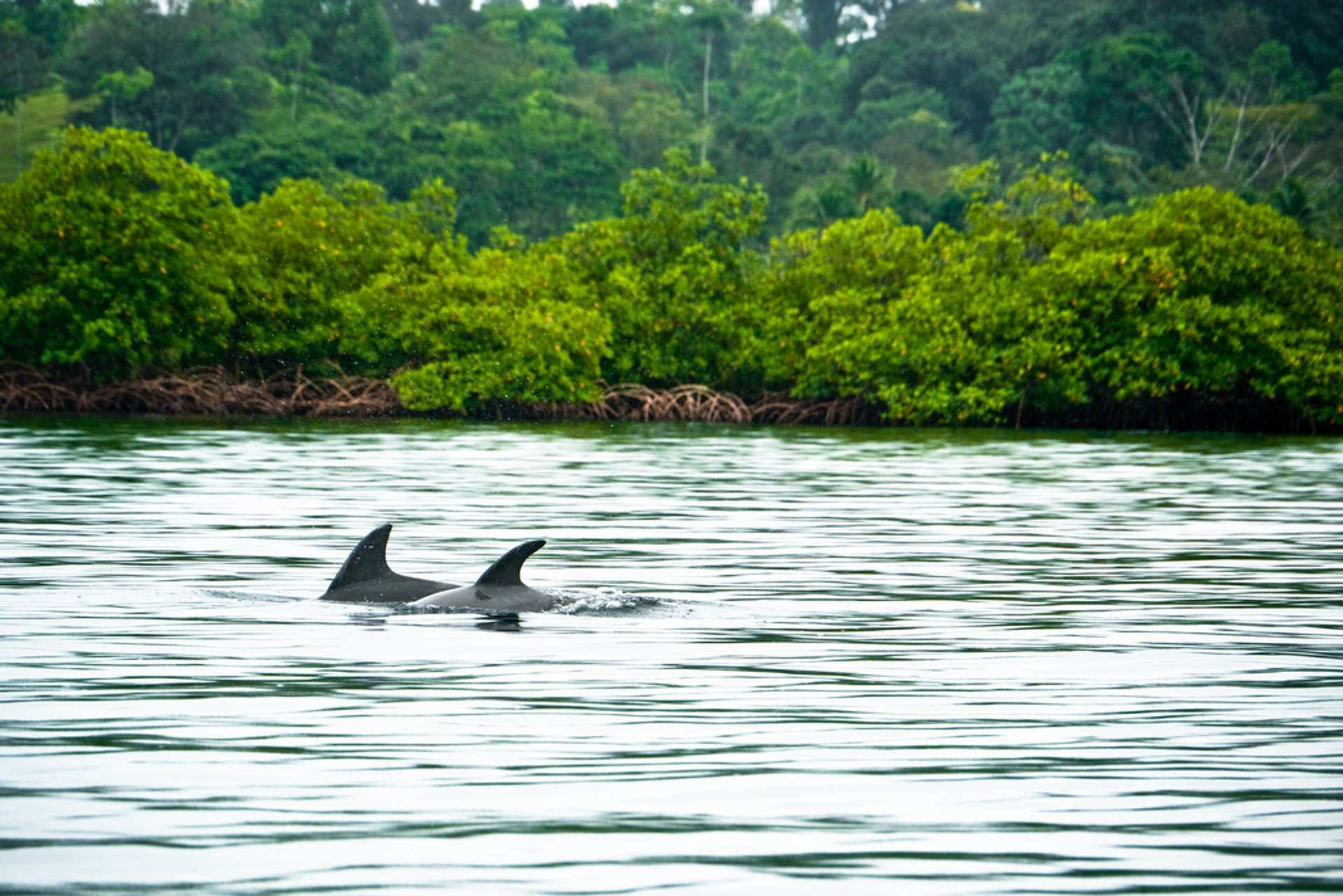 Dolphins Watching in Panama 2020 - Best Time