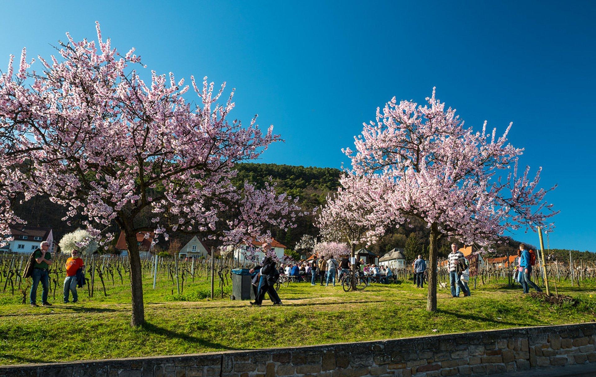 Gimmeldinger Mandelblütenfest 2020