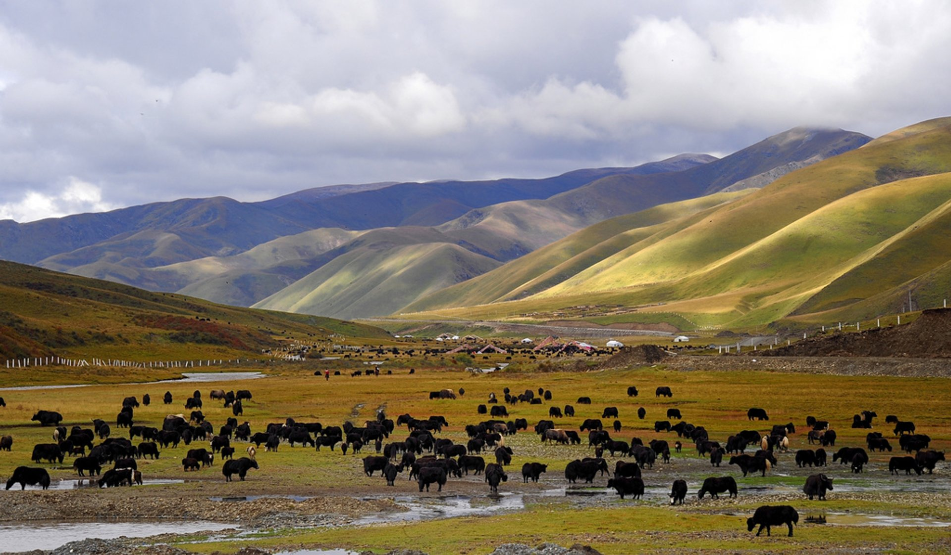 Best time to see Yaks in Tibet