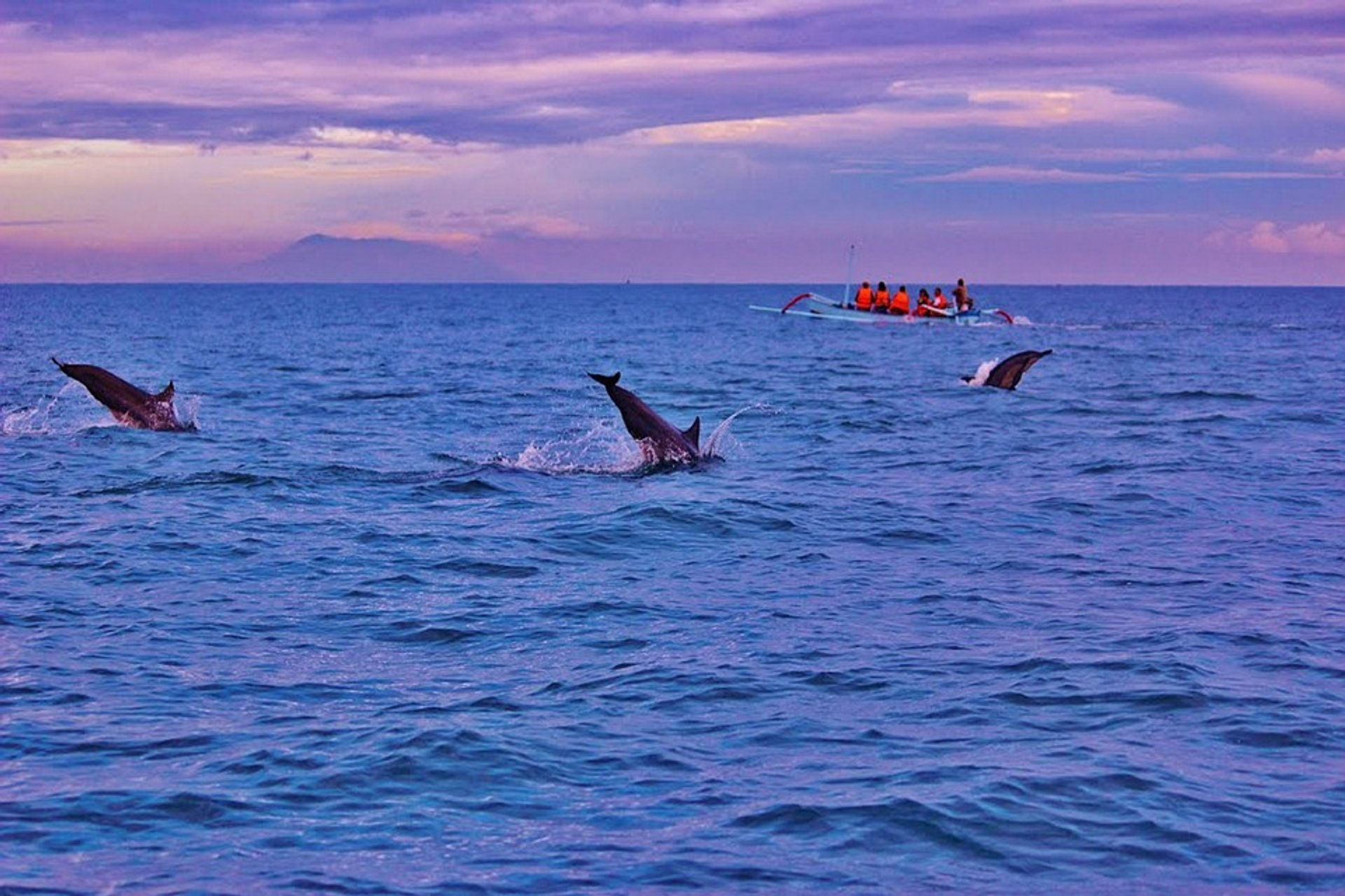 Best time for Lovina Dolphin Watching in Bali 2020