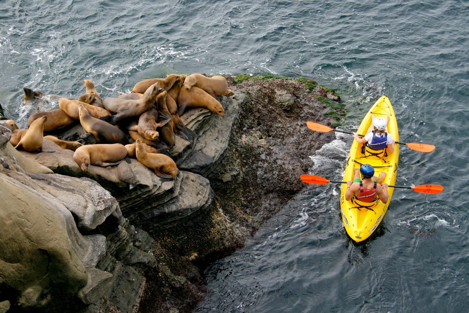 Kayaking in San Diego - Best Season 2020