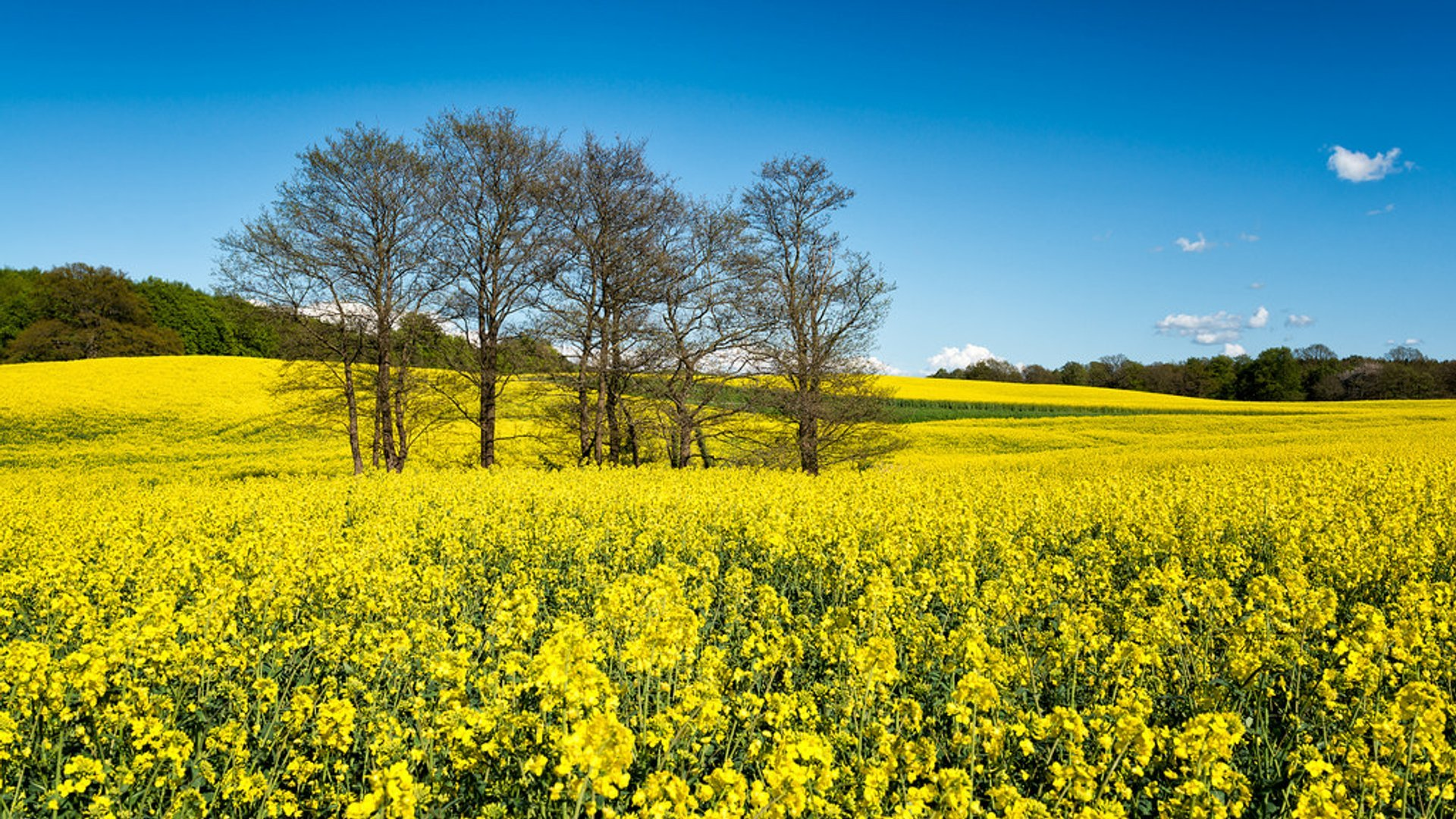 Skåne Yellow Spring in Sweden 2019 - Best Time