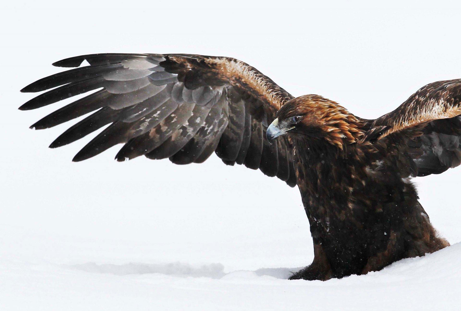 Hawk 2019
