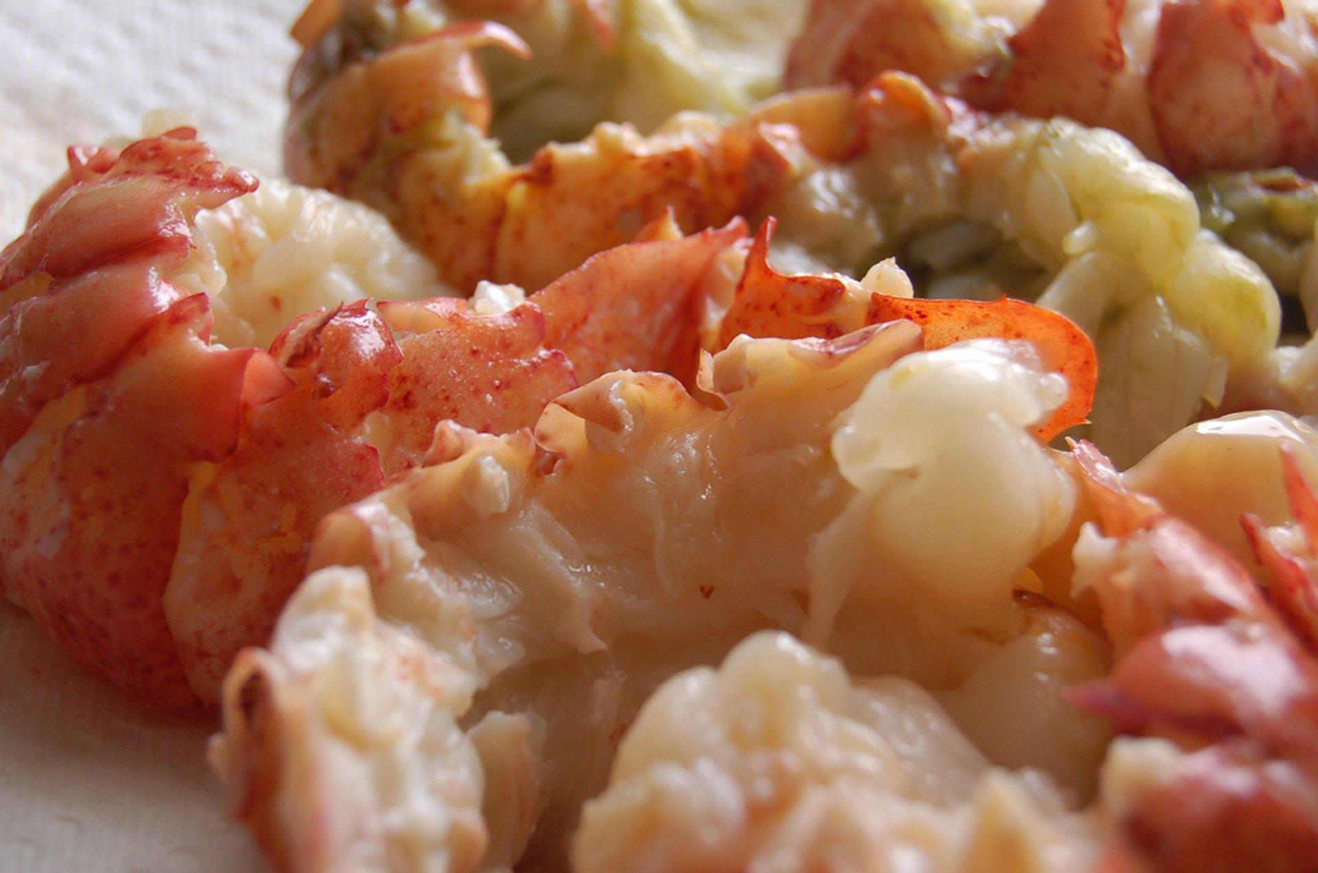 Lobster Season in Tasmania 2020 - Best Time