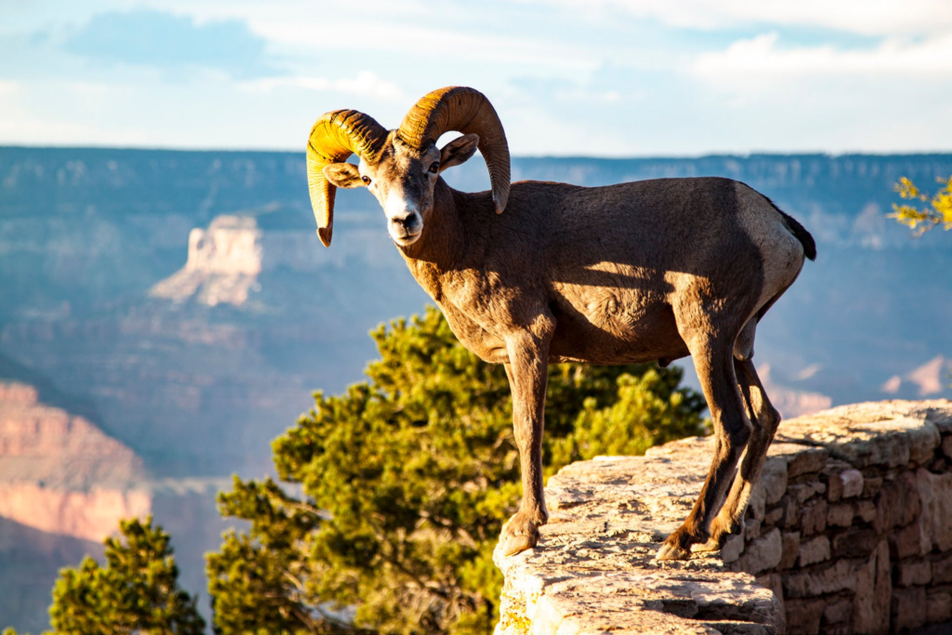 Wildlife Watching in Grand Canyon - Best Time