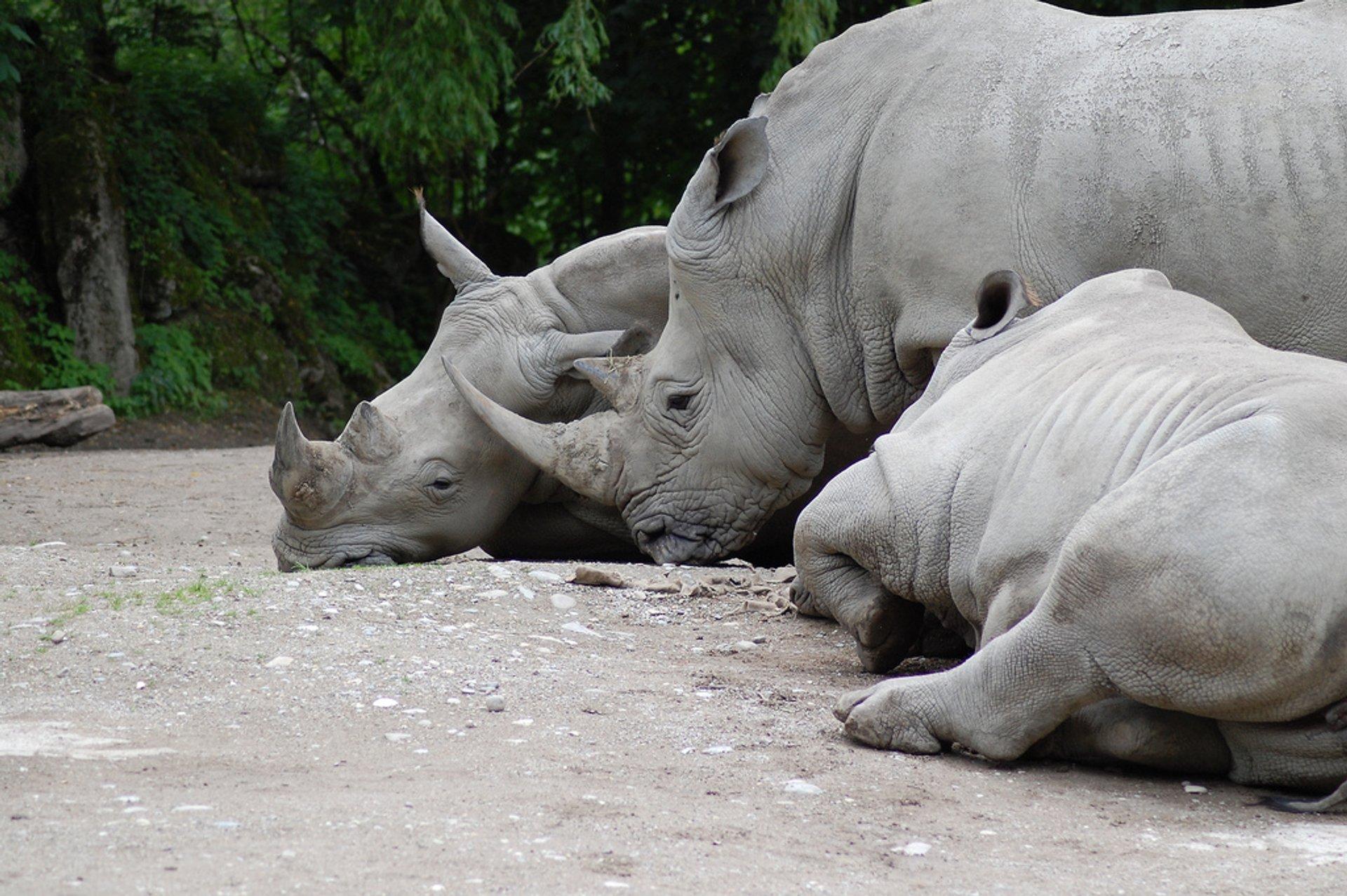 Besuch im Zoo von Salzburg 2020