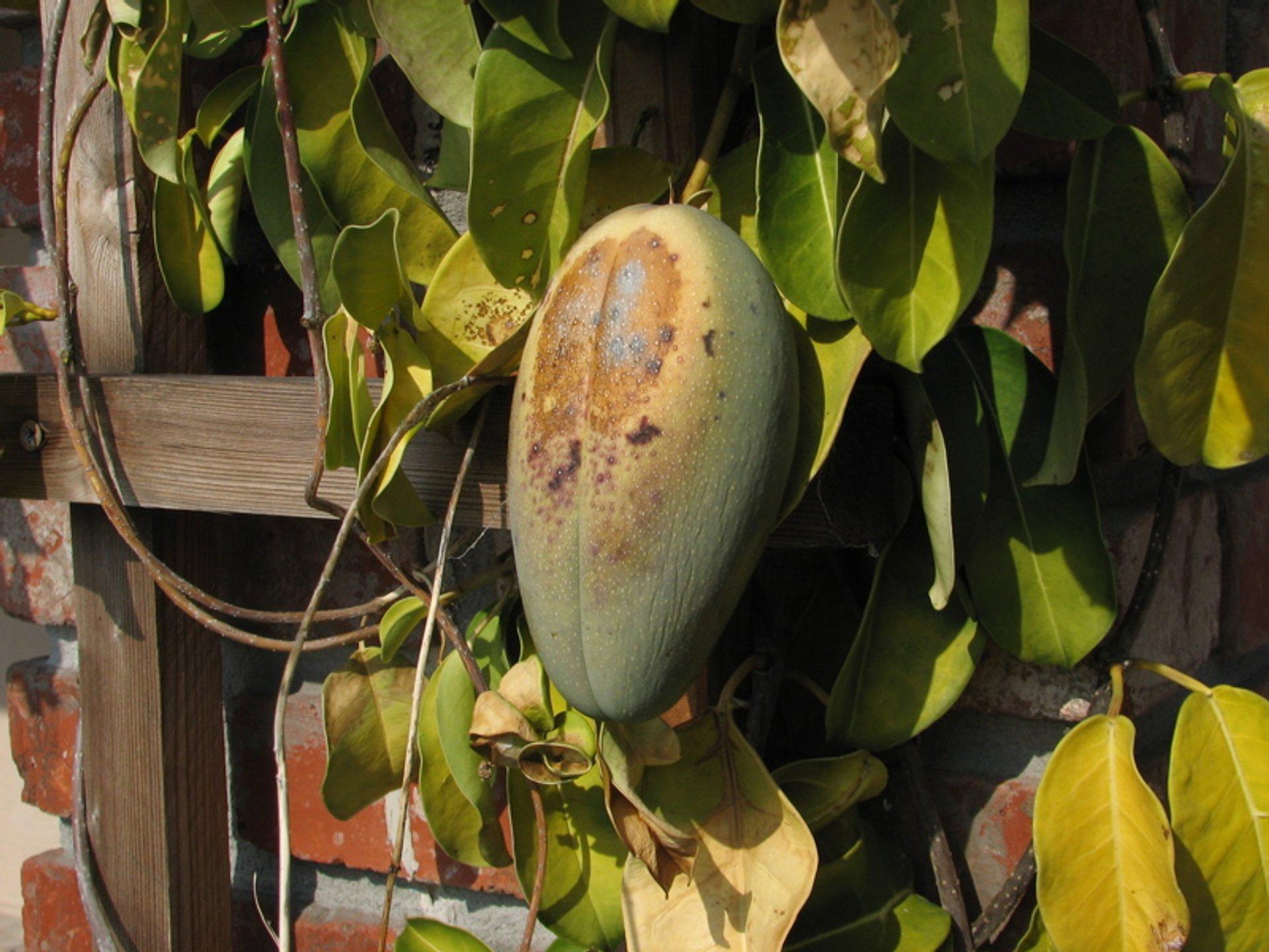 Exotic Fruits Season in Madagascar - Best Season