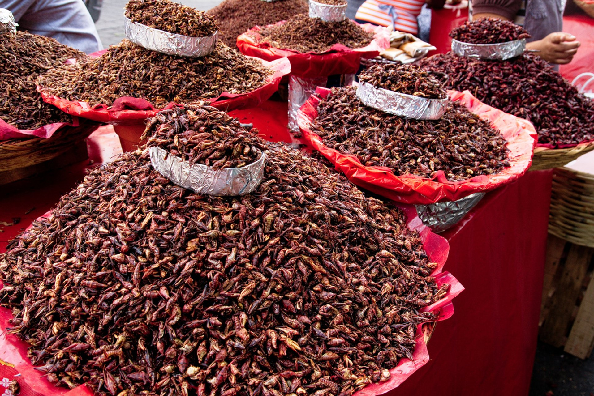 Chapulines or Grasshoppers in Mexico 2019 - Best Time